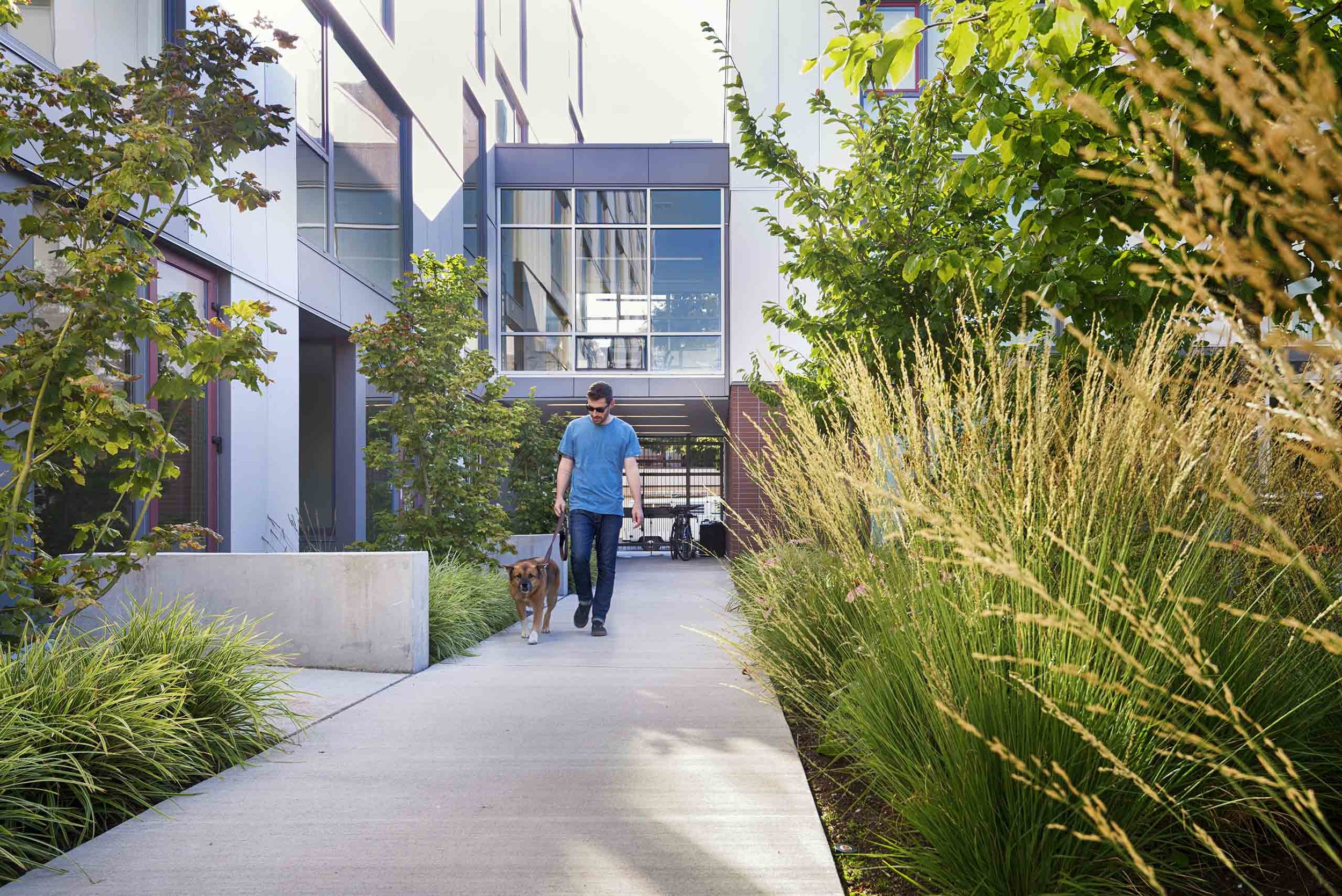 Landscape design for the BelRoy Apartments in Seattle, Washington.