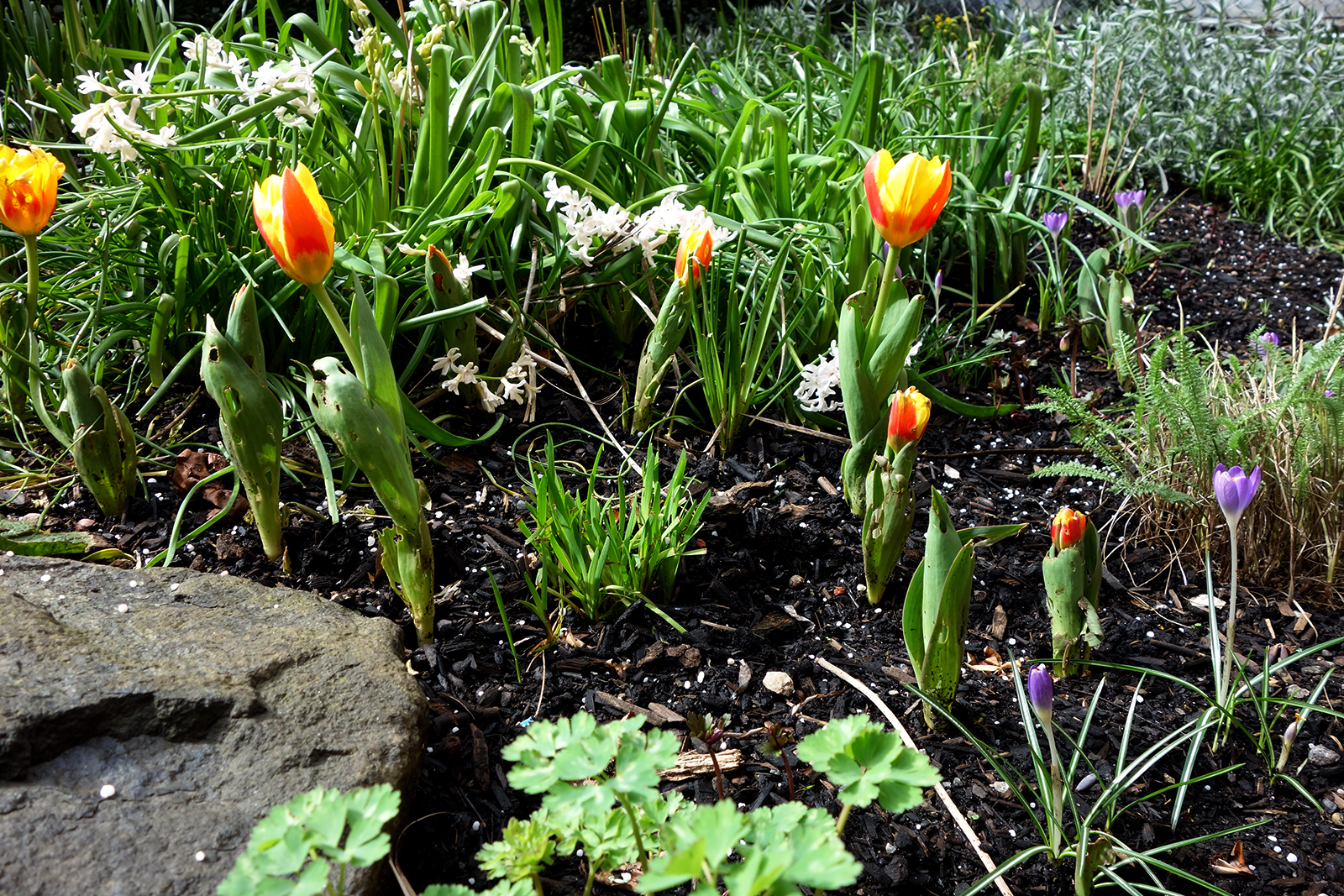 We are currently waiting for all our tulips (in Land Morphology orange!) to push their heads further out of the ground.