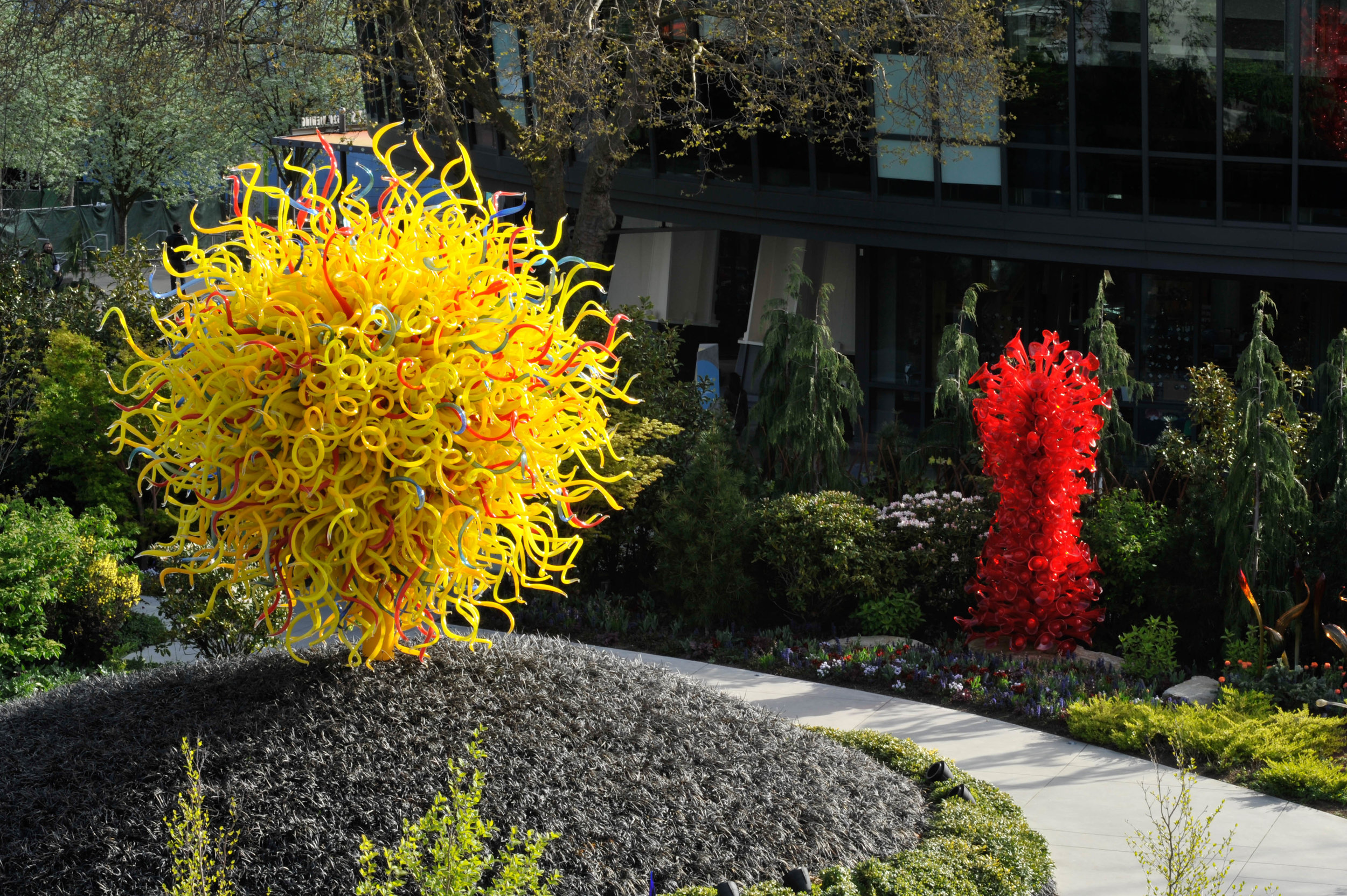 Black Mondo Grass at  Chihuly Garden and Glass (by Land Morphology)
