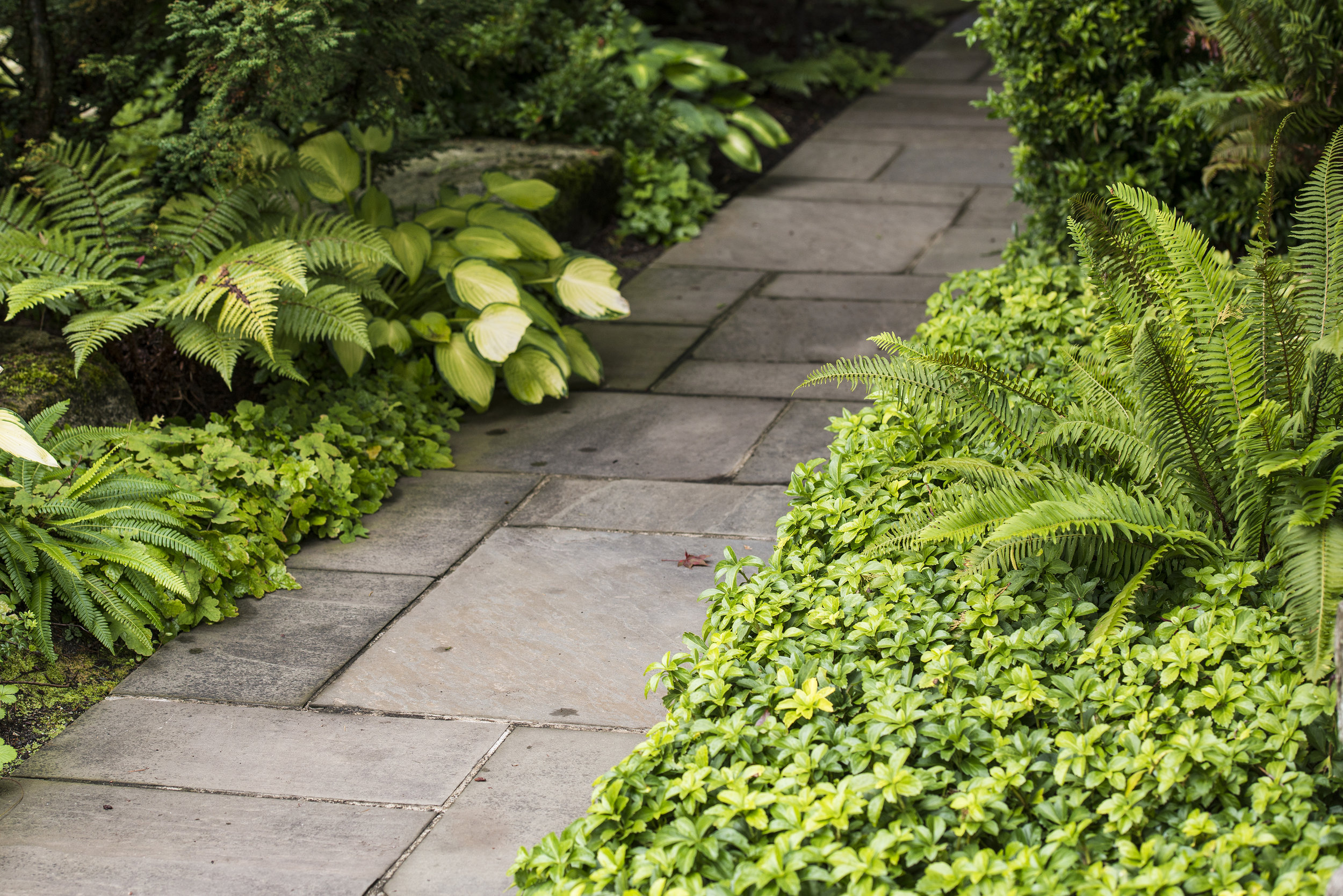 Planting along garden path with shade loving plants