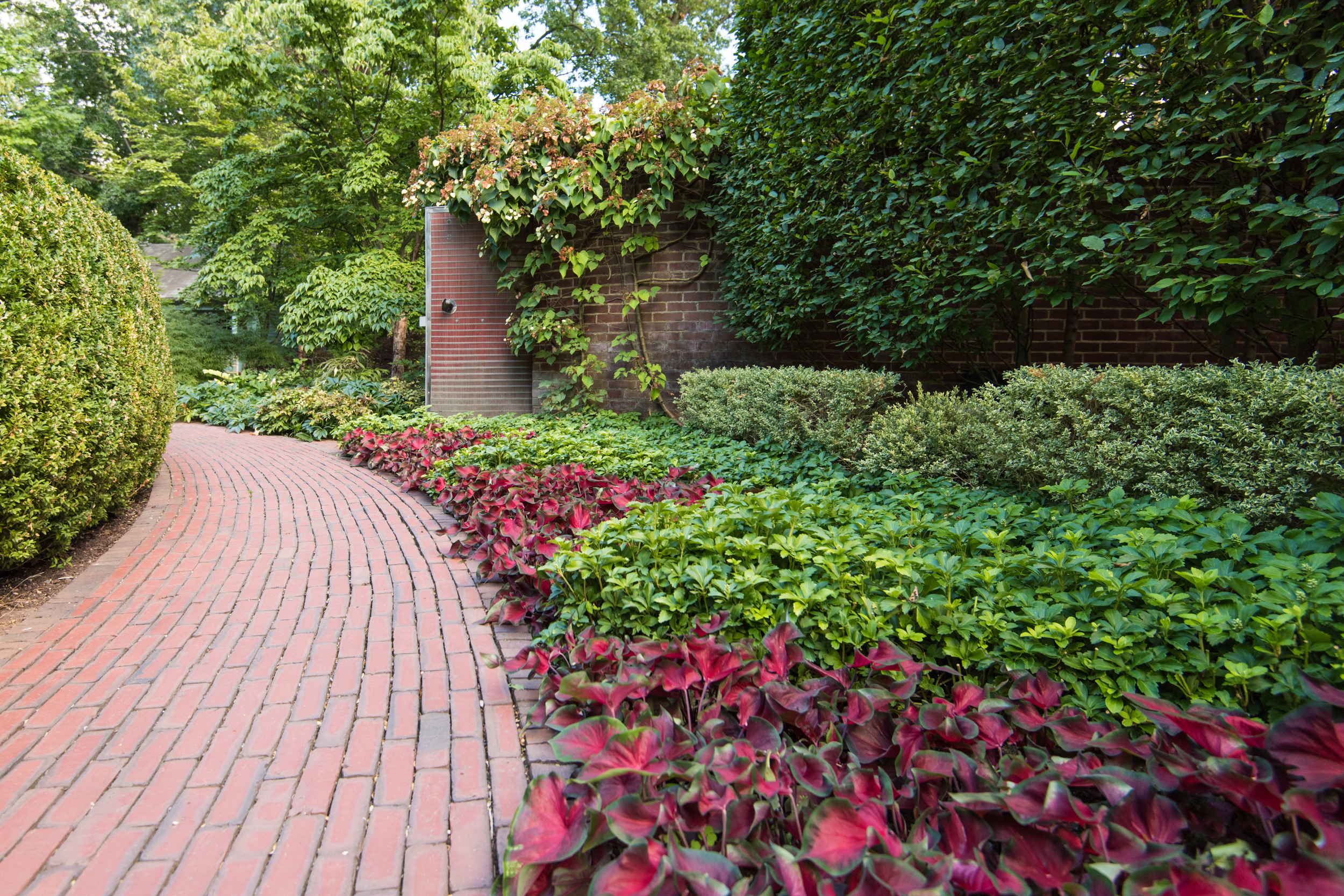 Brick pathway lined with a mass planting of Coleus and Pachysandra terminalis.