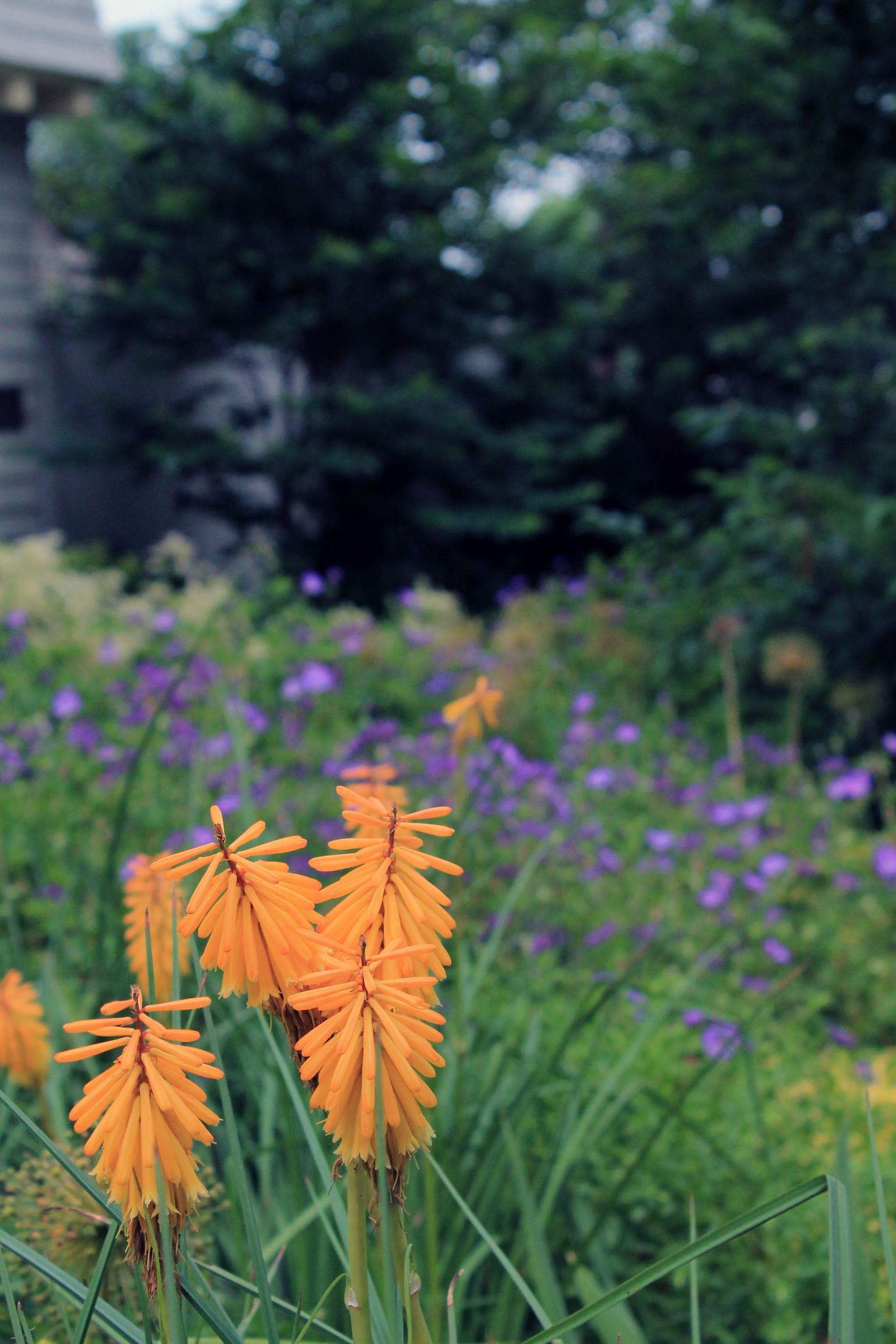 colorful planting arrangemen