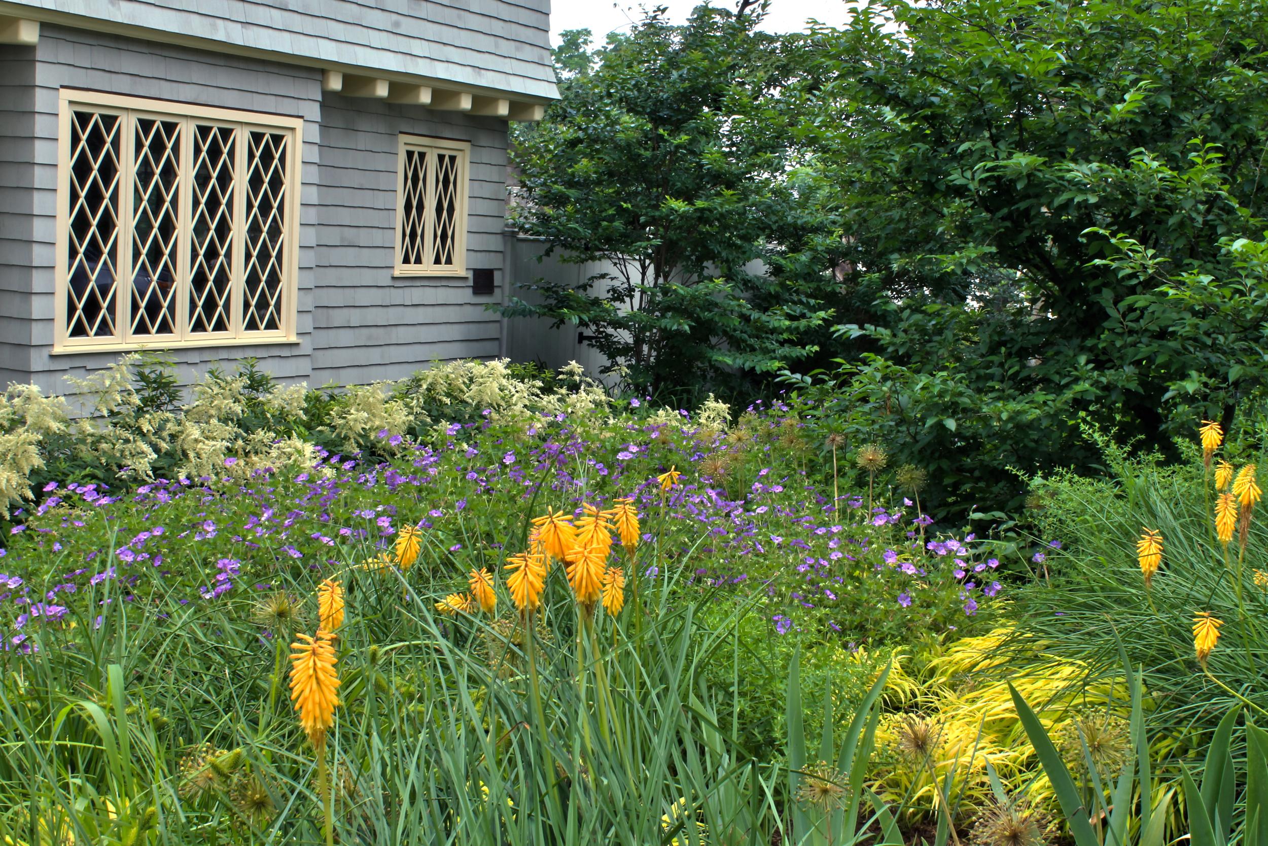 Kniphofia, geranium and aruncus in colorful planting arrangement