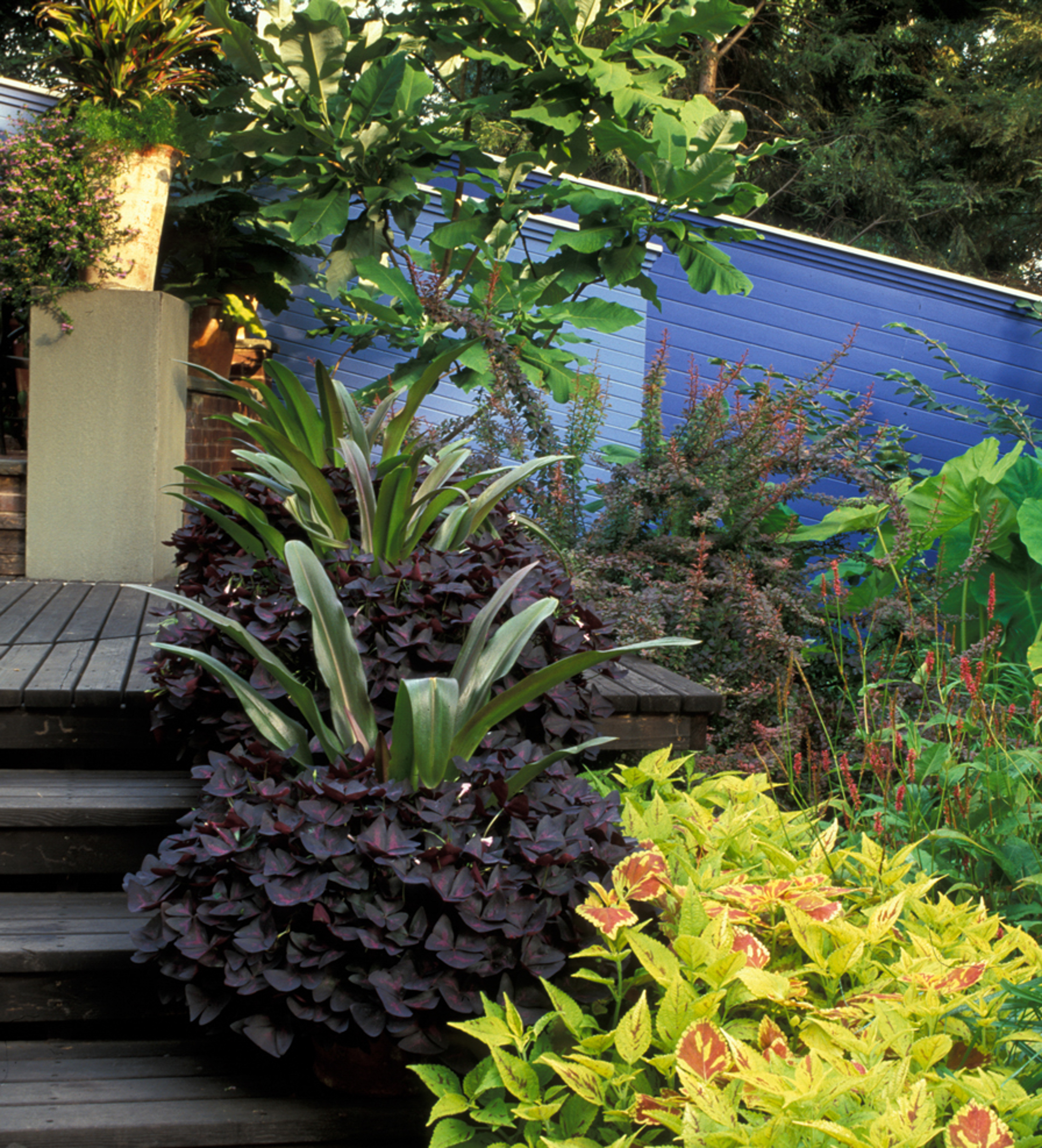 wooden patio and steps with potted coleus