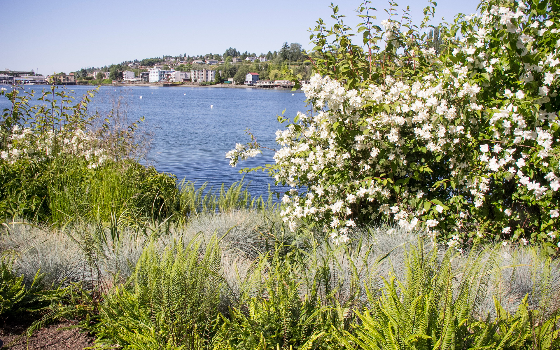 Contemporary lakeside garden