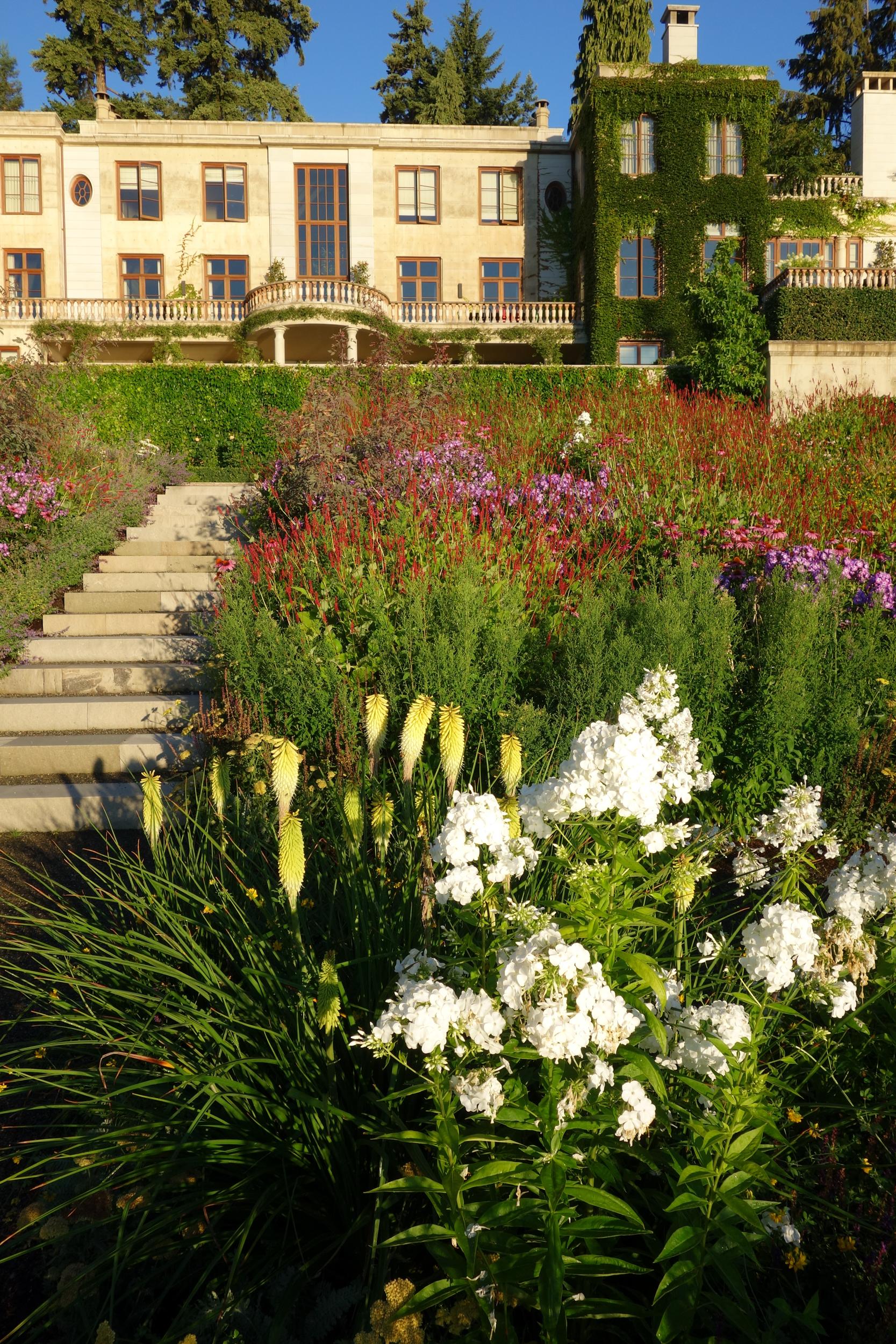 Meadow planting in estate garden