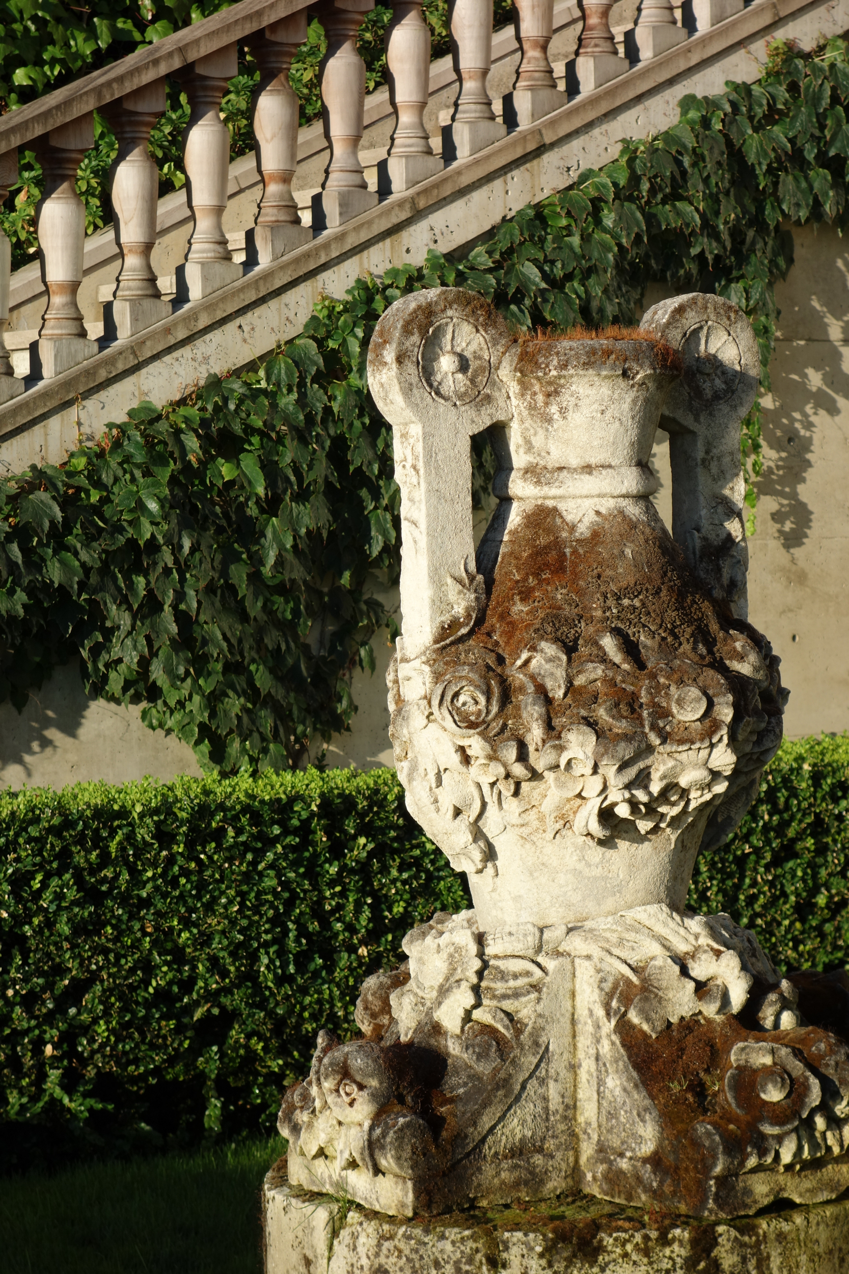 Detail of garden urn with background of Parthenocissus tricuspidata and  boxus