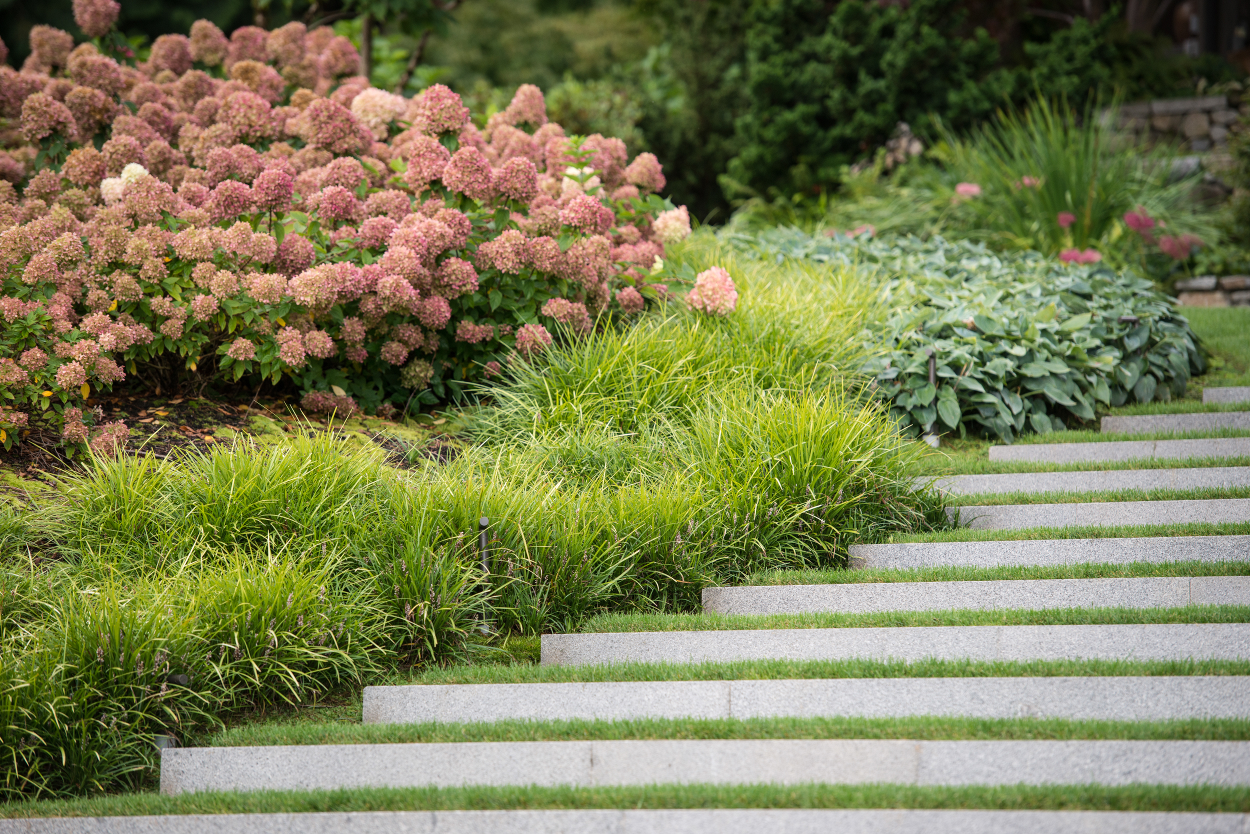 Granite and turf steps framed by mass plantings