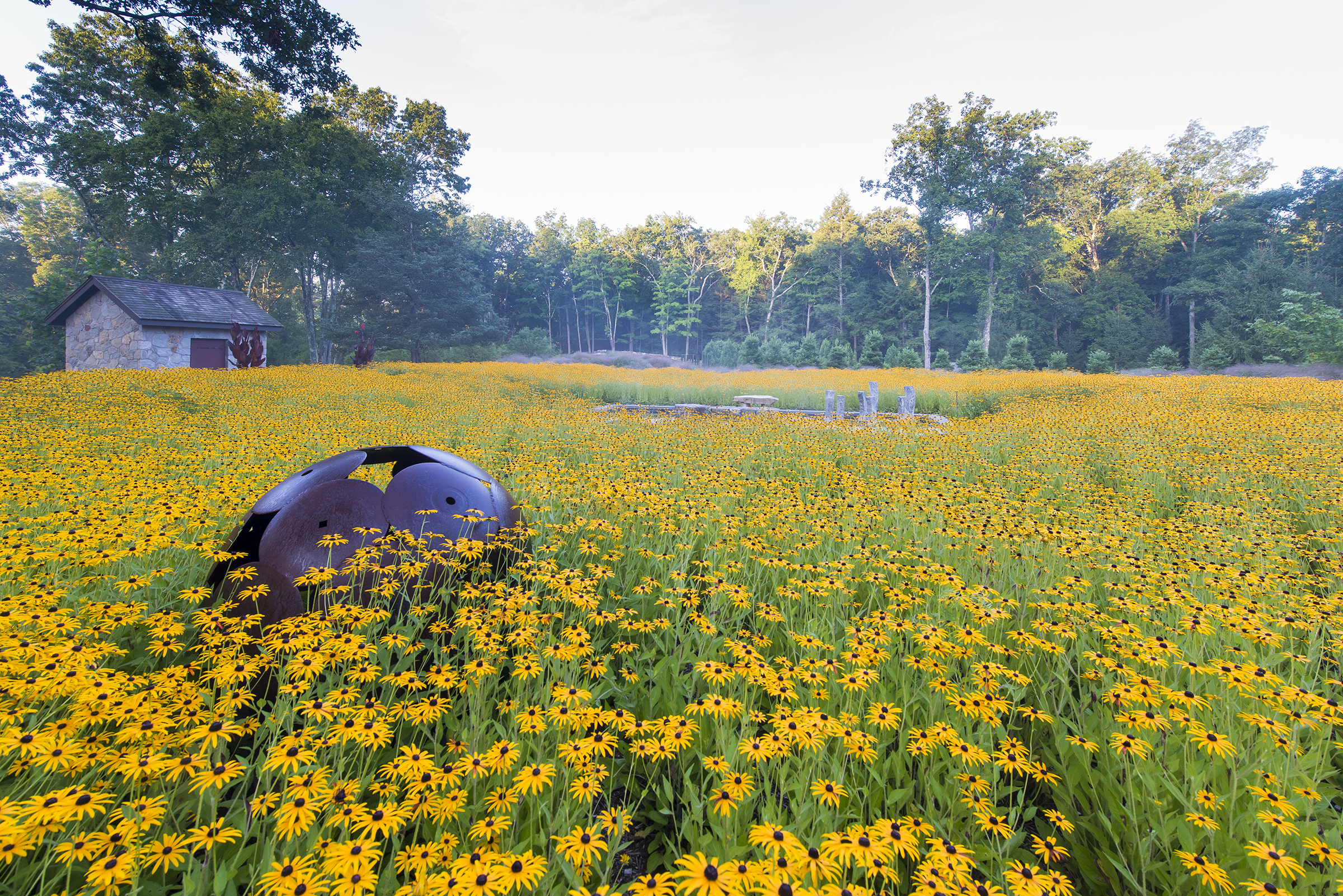 circular steel sculpture and reflective pool in rudbeckia fulgida