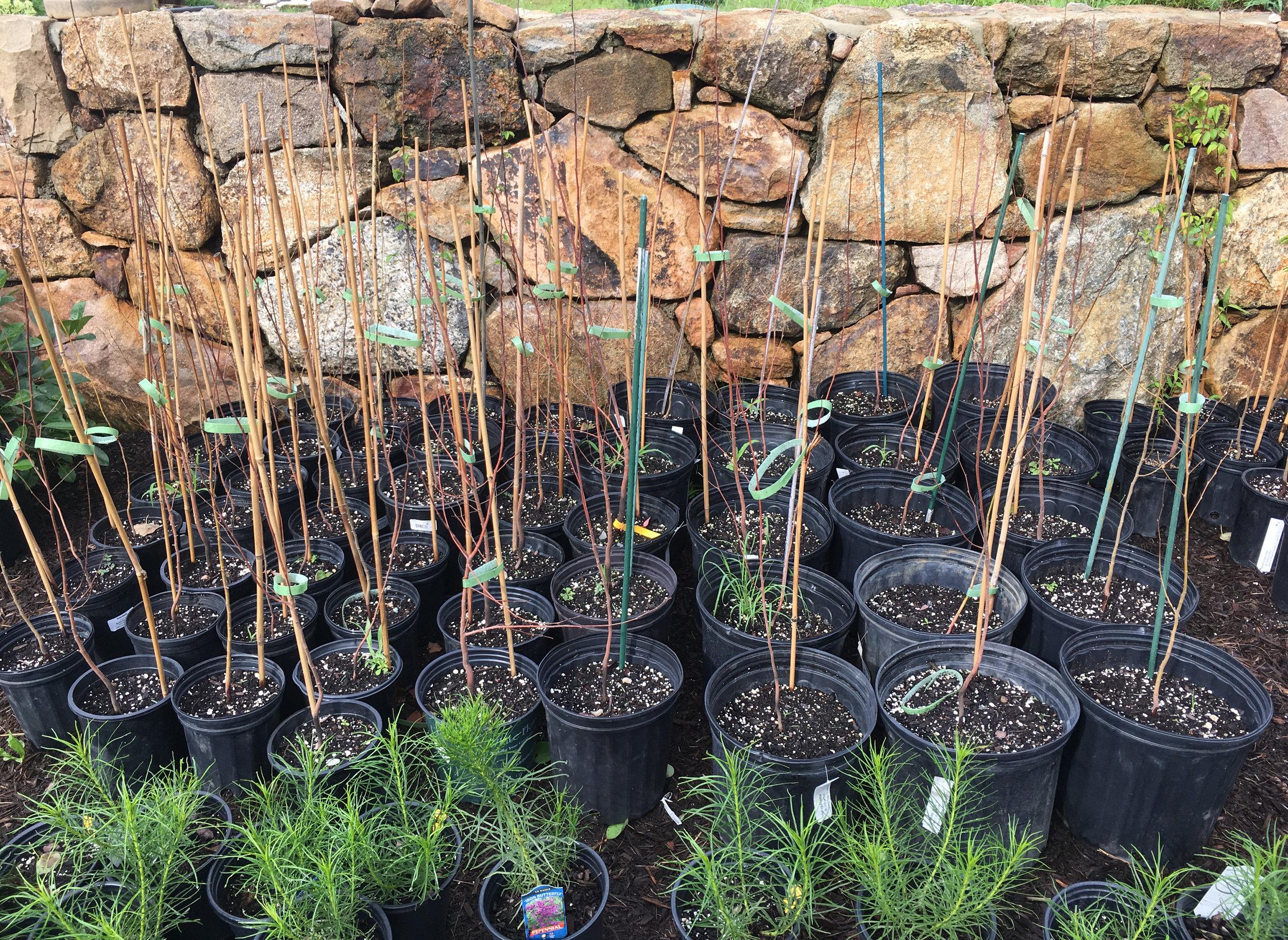 Land Morphology Planting Day Hound Hill.jpg