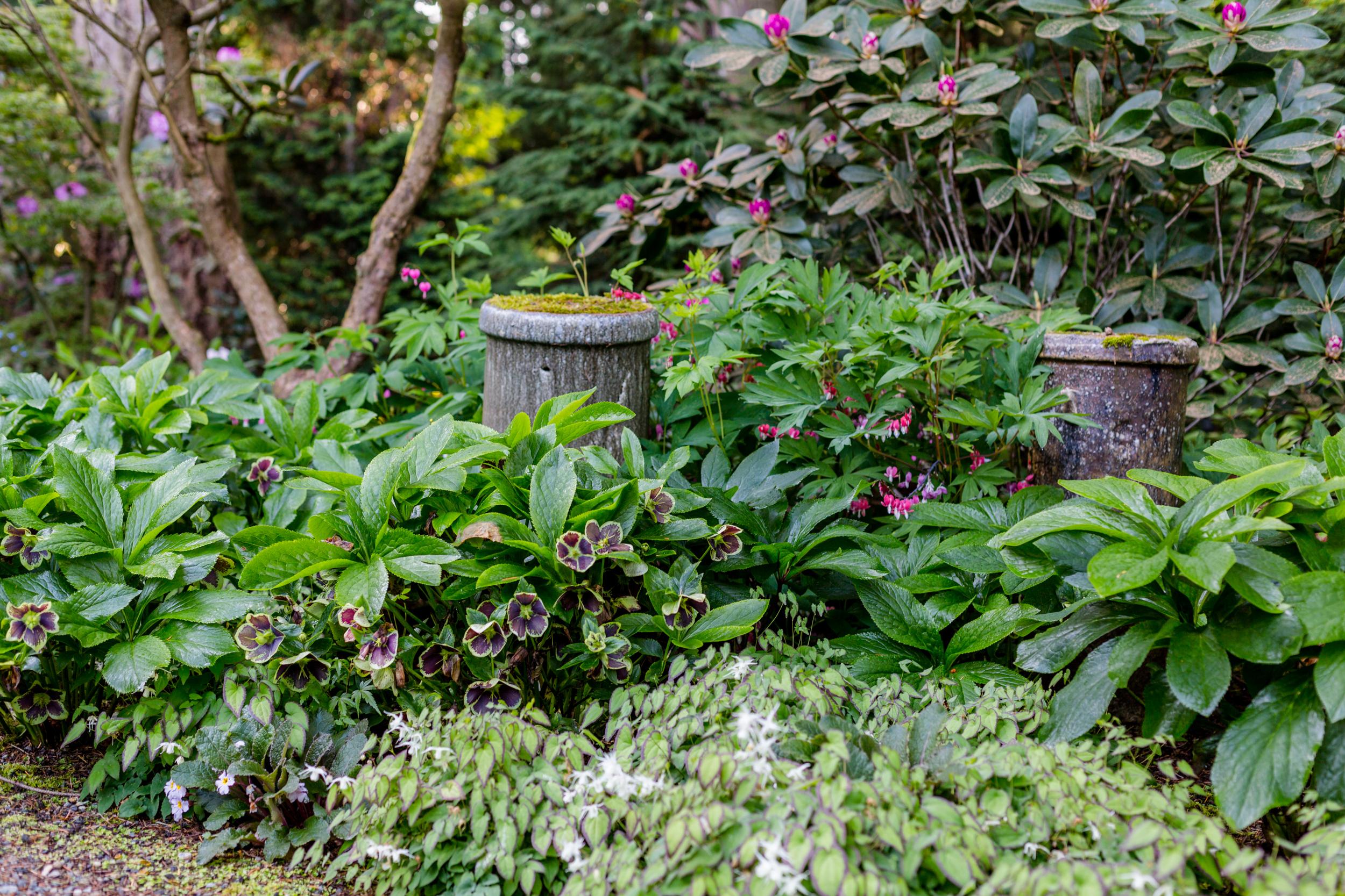 Woodland garden  Photo by Miranda Estes Photography