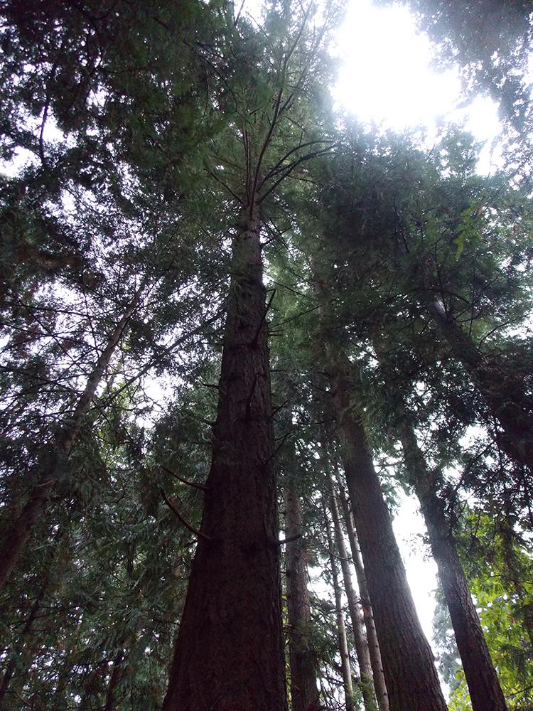 Tree_DSCN1695.jpg