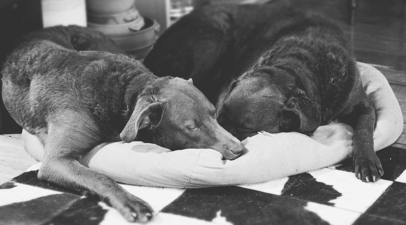 7 Essentials for a dog homestay