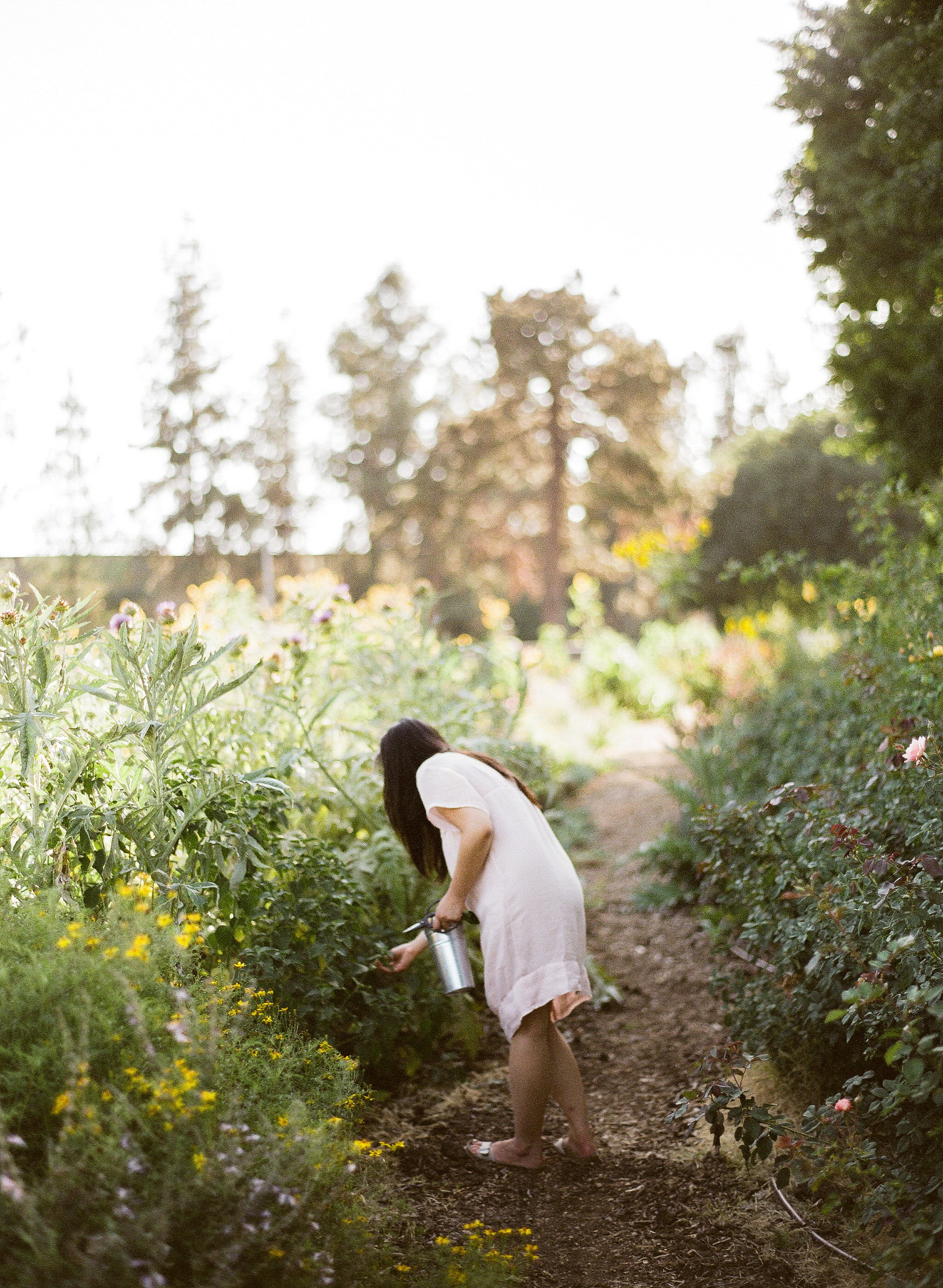 URBAN FARM FORAGING with EMBLEM FLOWERS -