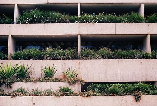 Concrete jungle by @kalindymillions #brisbane #film #nature #concrete #35mm #ishootfilm #analogue #mixedbuisnesscollective