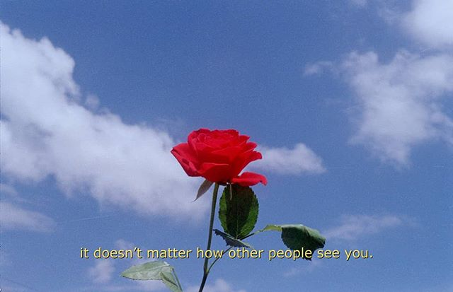 Roses are red , violets are blue, it doesn't matter how other people see you 🌷 treat and see youself with love and compassion #35mm #photography #film #rose #subtitles #suburbs #ishootfilm
