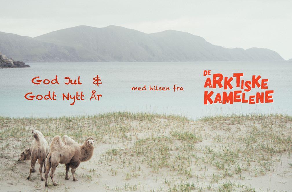 De Arktiske Kamelene.jpg