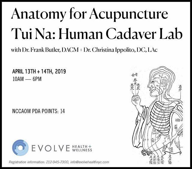 Human Cadaver Lab for akupunktur og Tui Na. Bli med Phoenix Kurs til USA