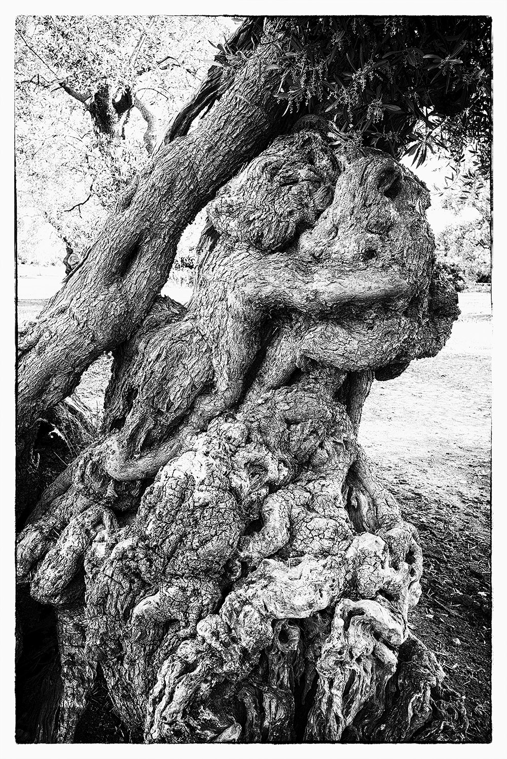 Fotowerk Naturfotografie - knorrige Rinde