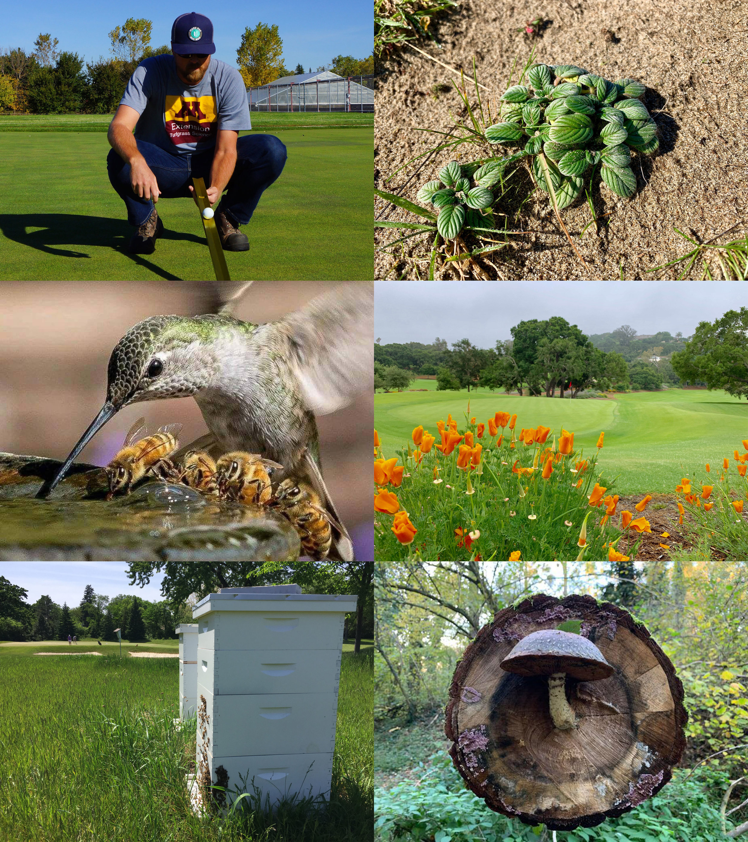Environmental Stewardship Marketing: - Golf courses are often perceived negatively with regard to environmental issues. Learn how, through data collection and analysis, how your facility can become an environmental leader in your community and the industry and utilize these efforts to increase participation at your facility. Market research indicates that sustainability is of significant value when consumers are making purchasing decisions for goods and services.