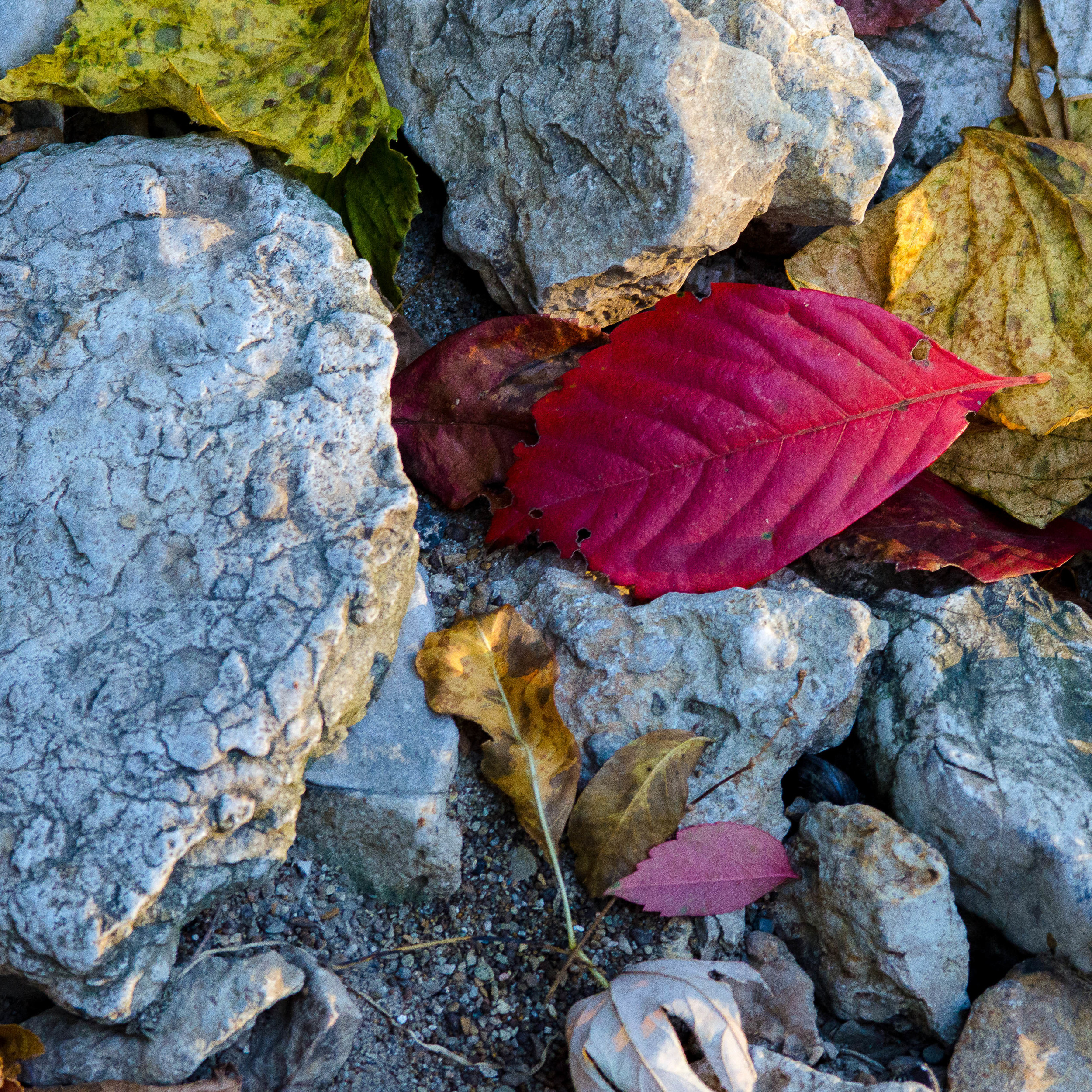 Fall Underfoot