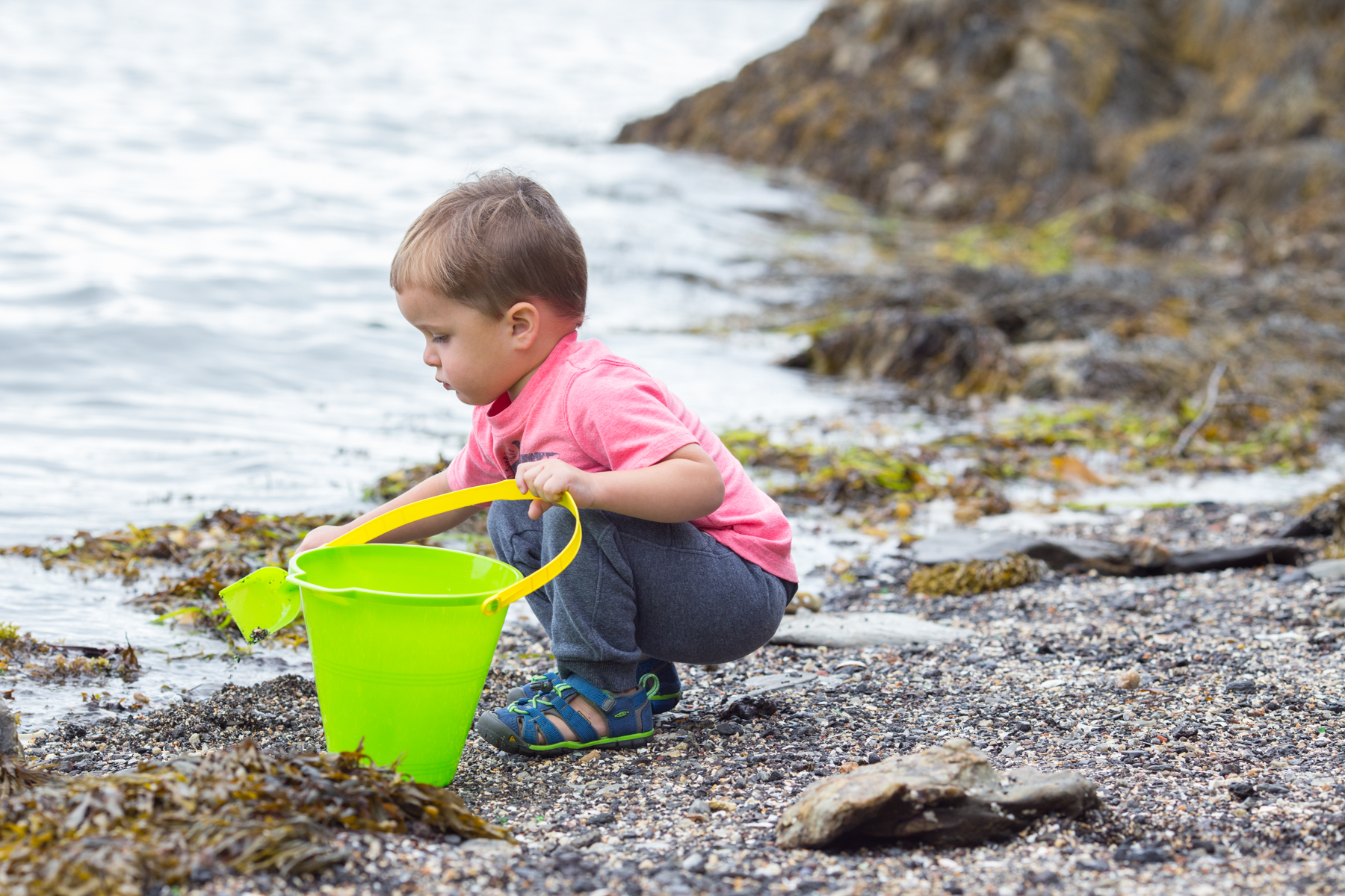 todder digging at Diamond Cove, Maine