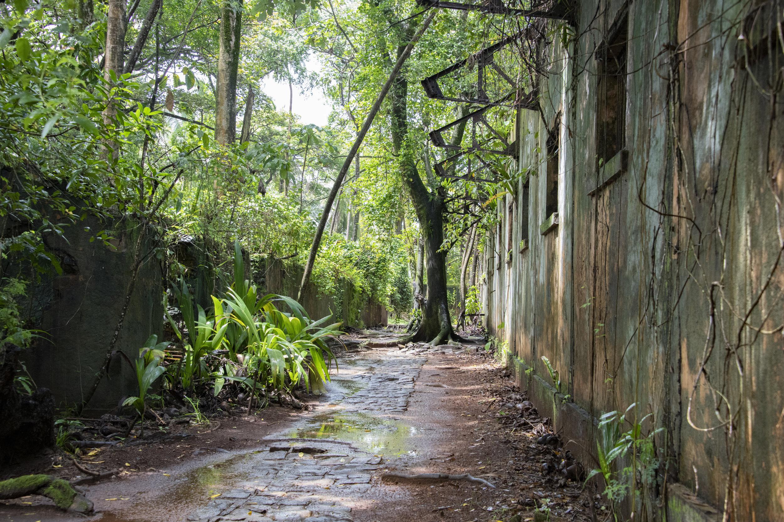 Ruins at Île St Joseph, Îles du Salut, French Guiana