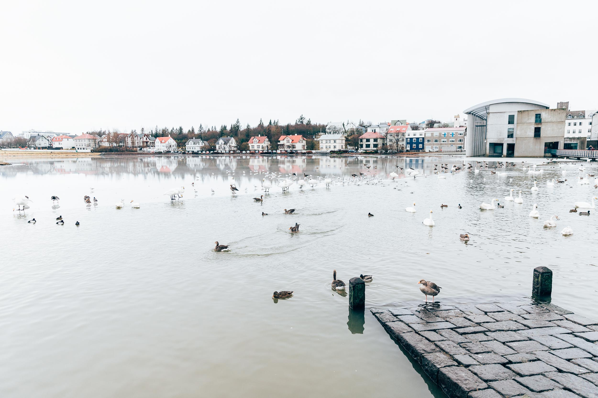 02_2019_Iceland-42.jpg