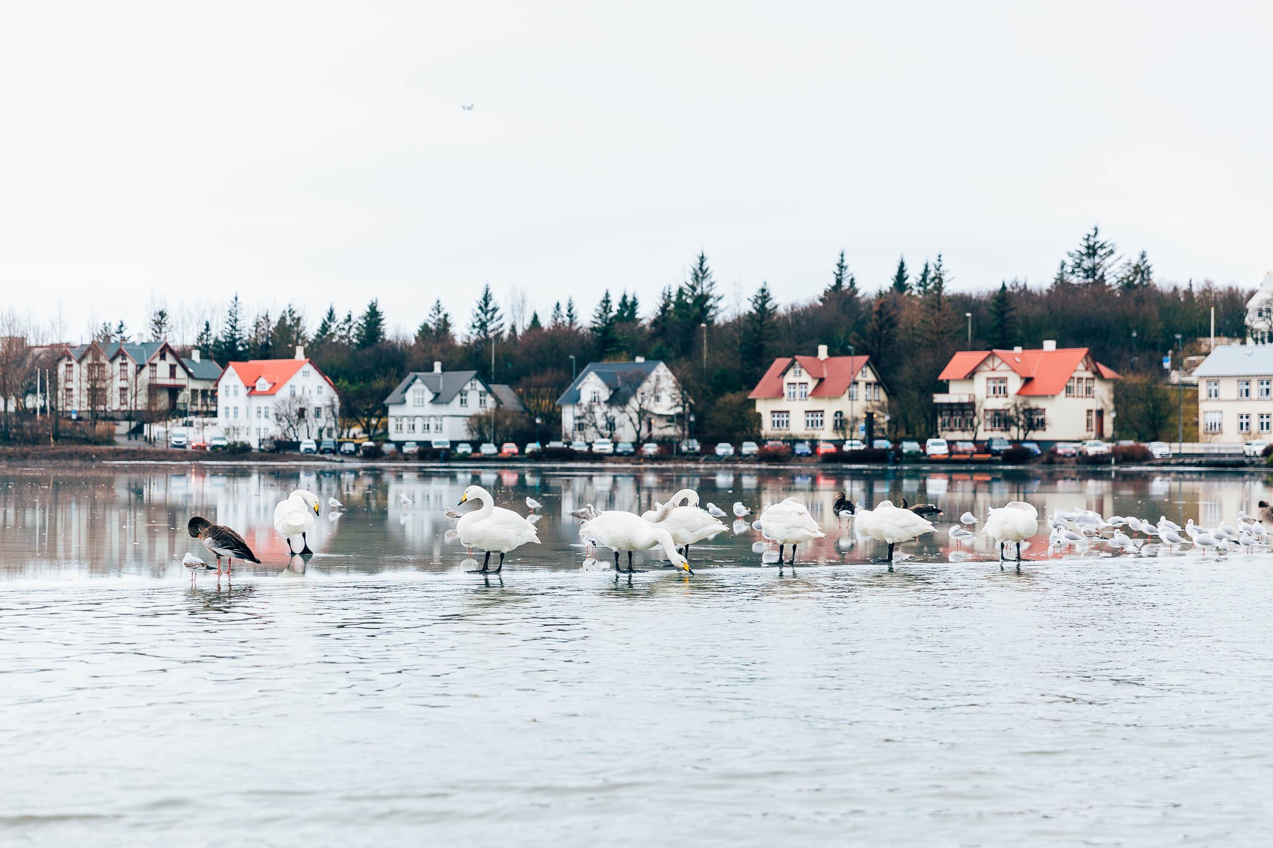 02_2019_Iceland-47.jpg