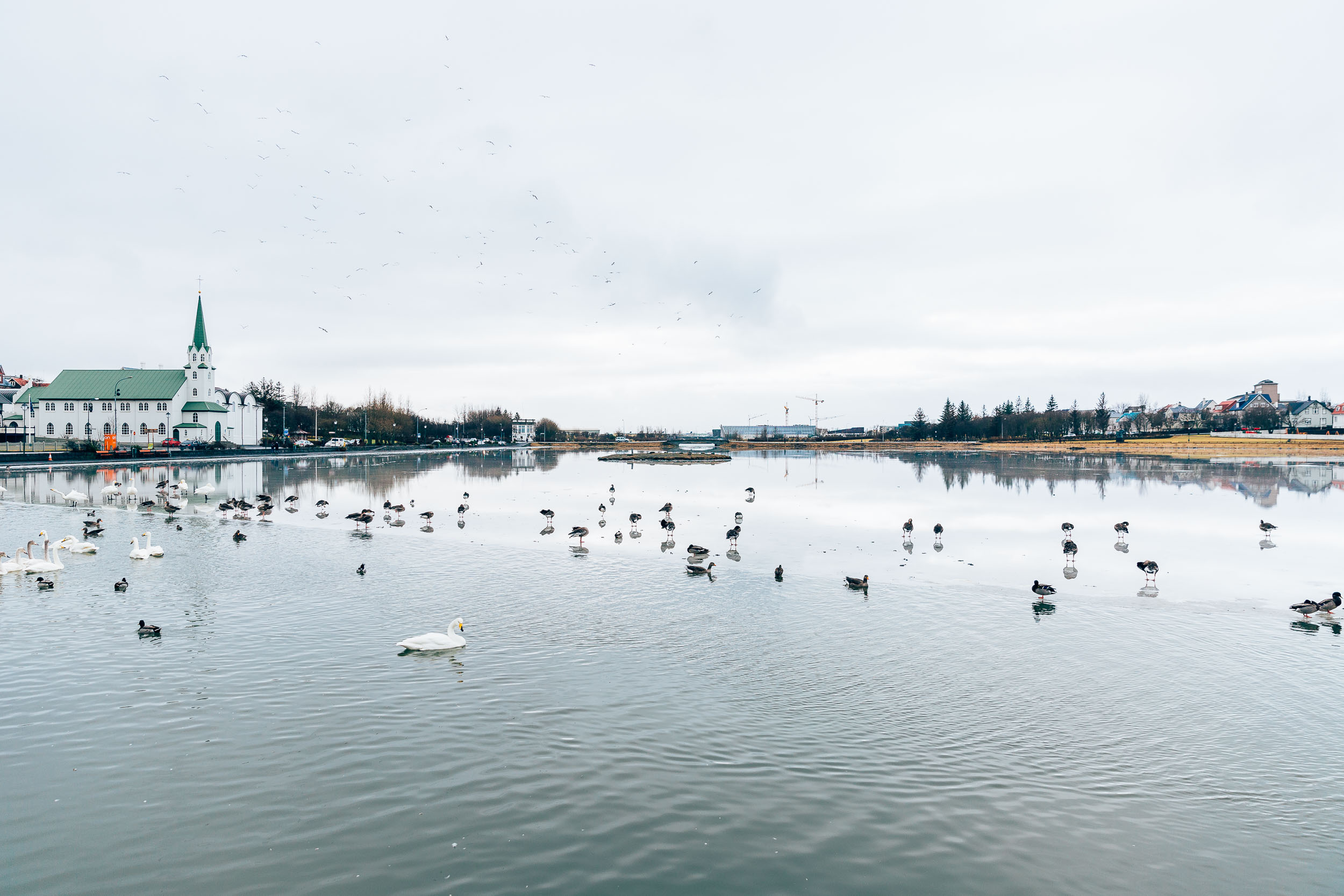 02_2019_Iceland-50.jpg