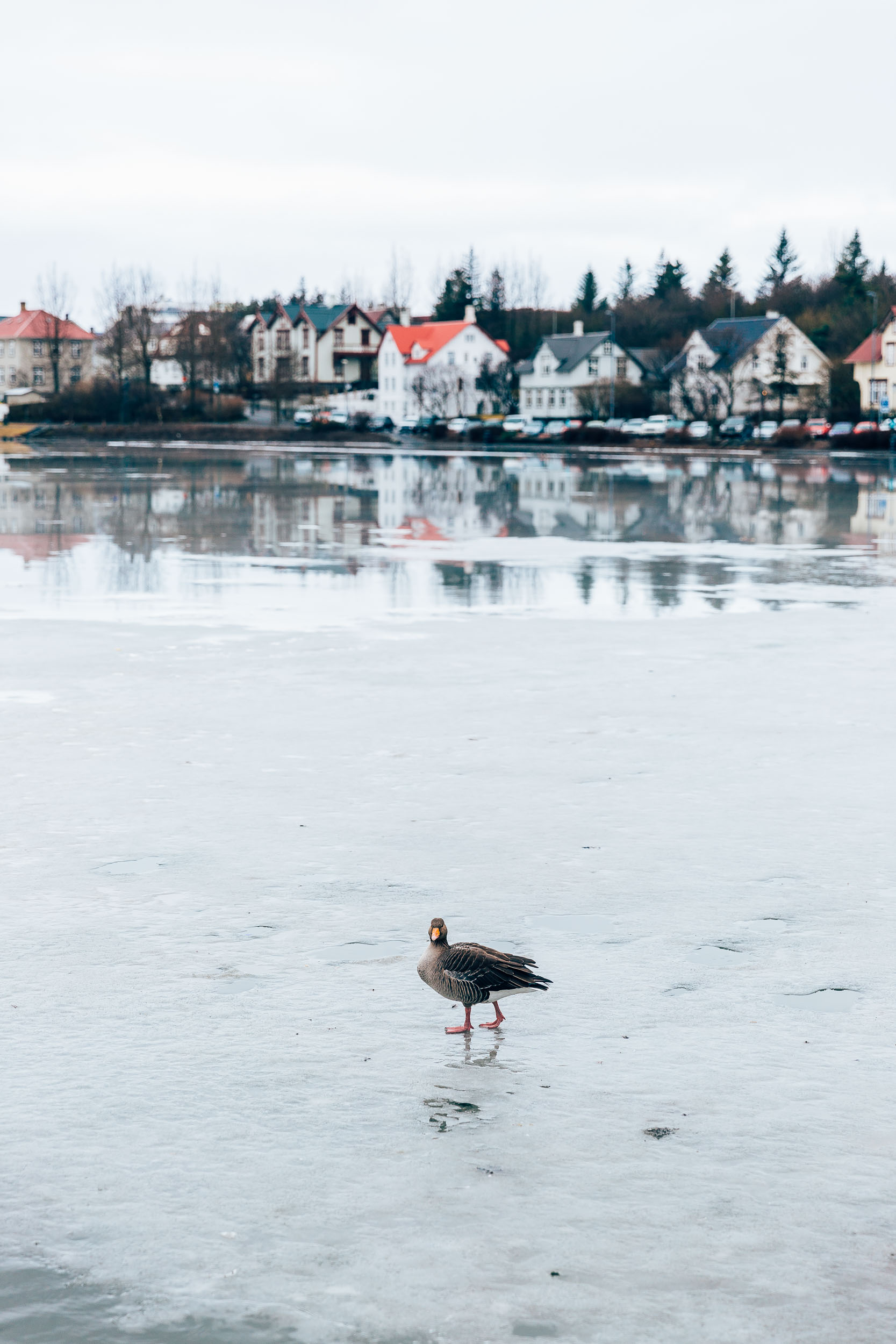 02_2019_Iceland-52.jpg