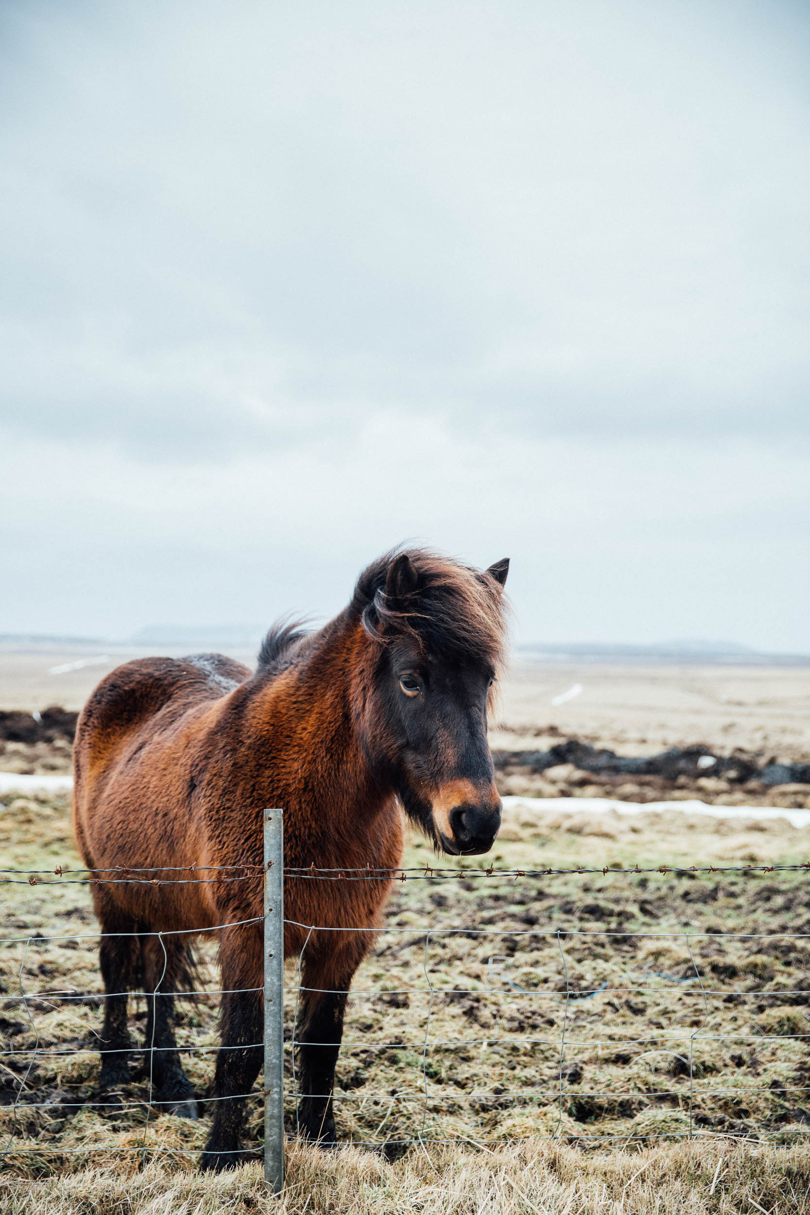 02_2019_Iceland-336.jpg