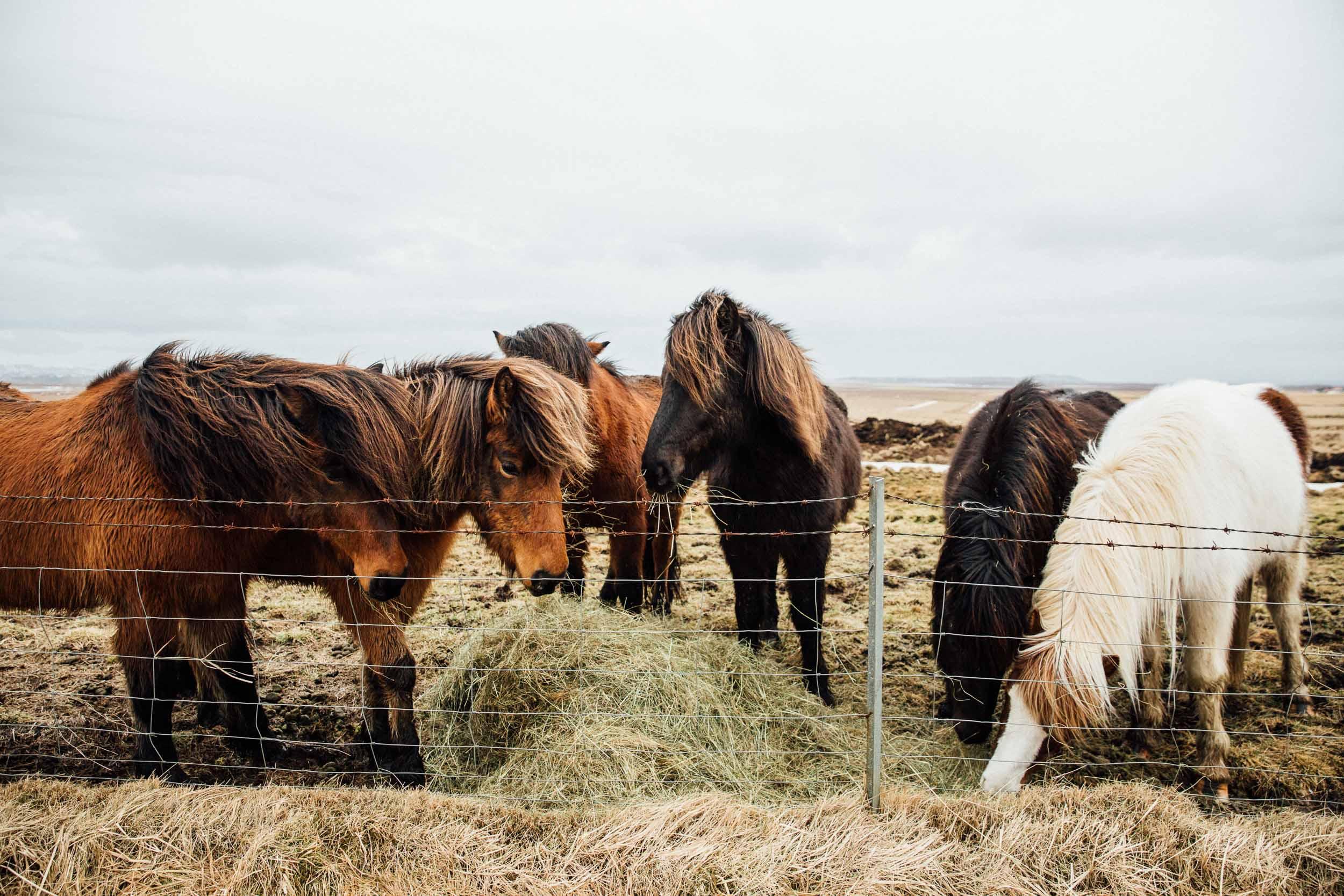 02_2019_Iceland-337.jpg