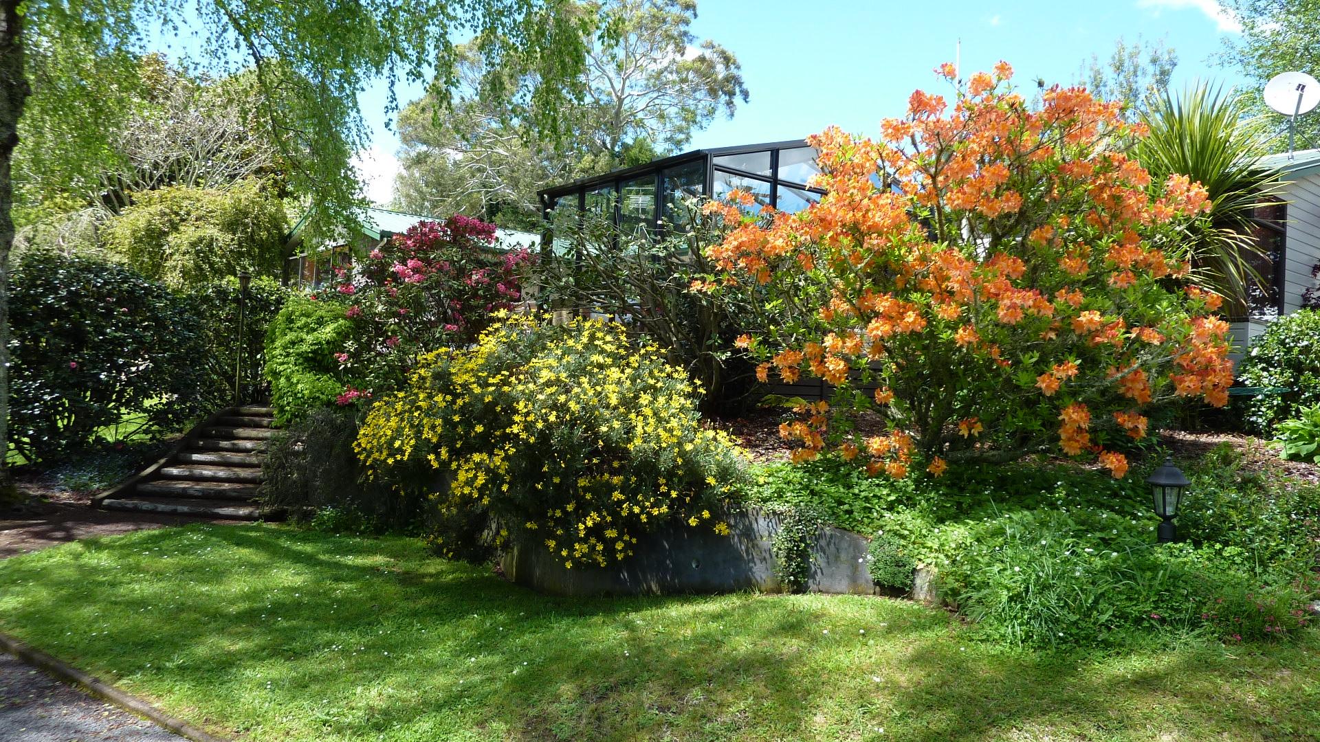 Spring-time at Mokoia Downs .JPG