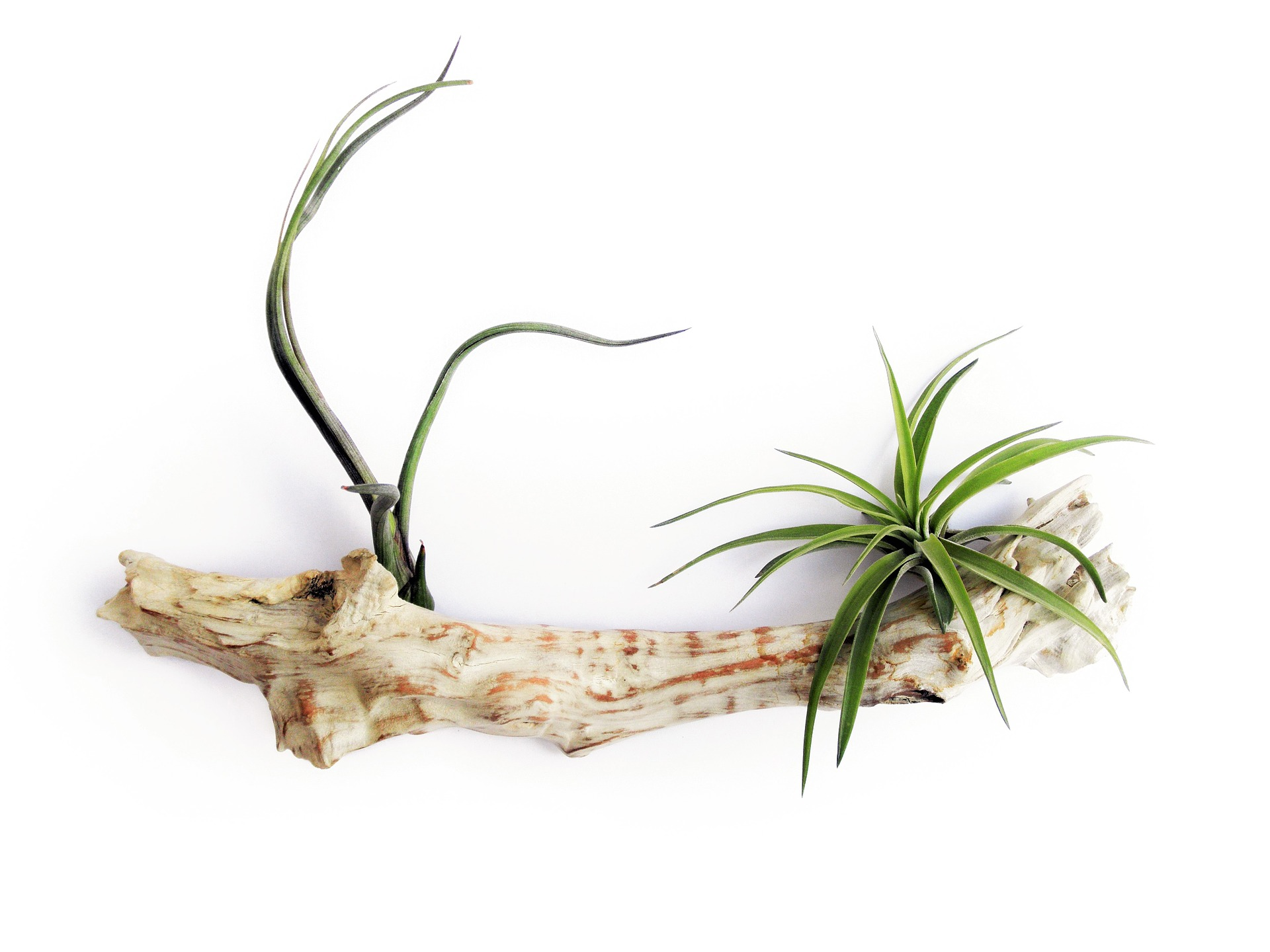 air plants one on one