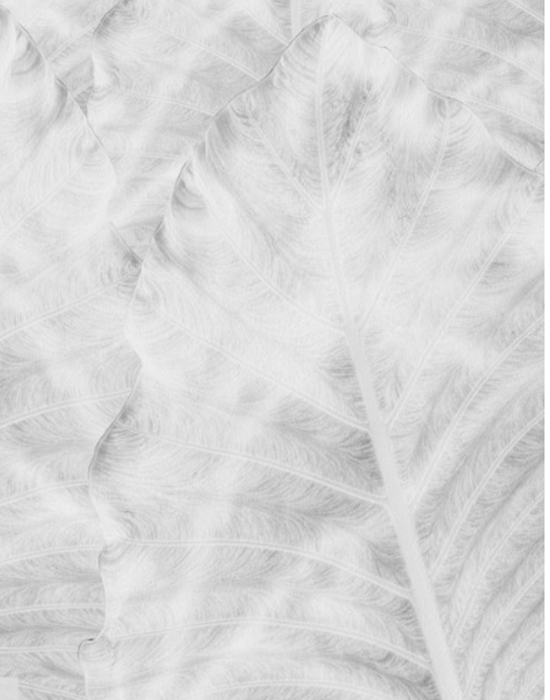 SHADOW FROND WHITE.jpg