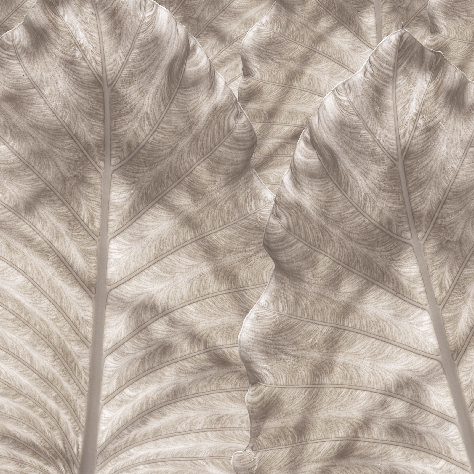 SHADOW FROND BEIGE.jpg