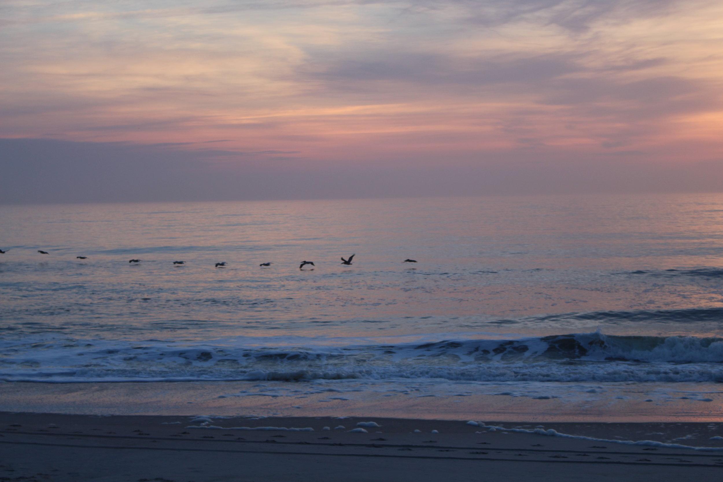 Birds in the sunrise carolina beach