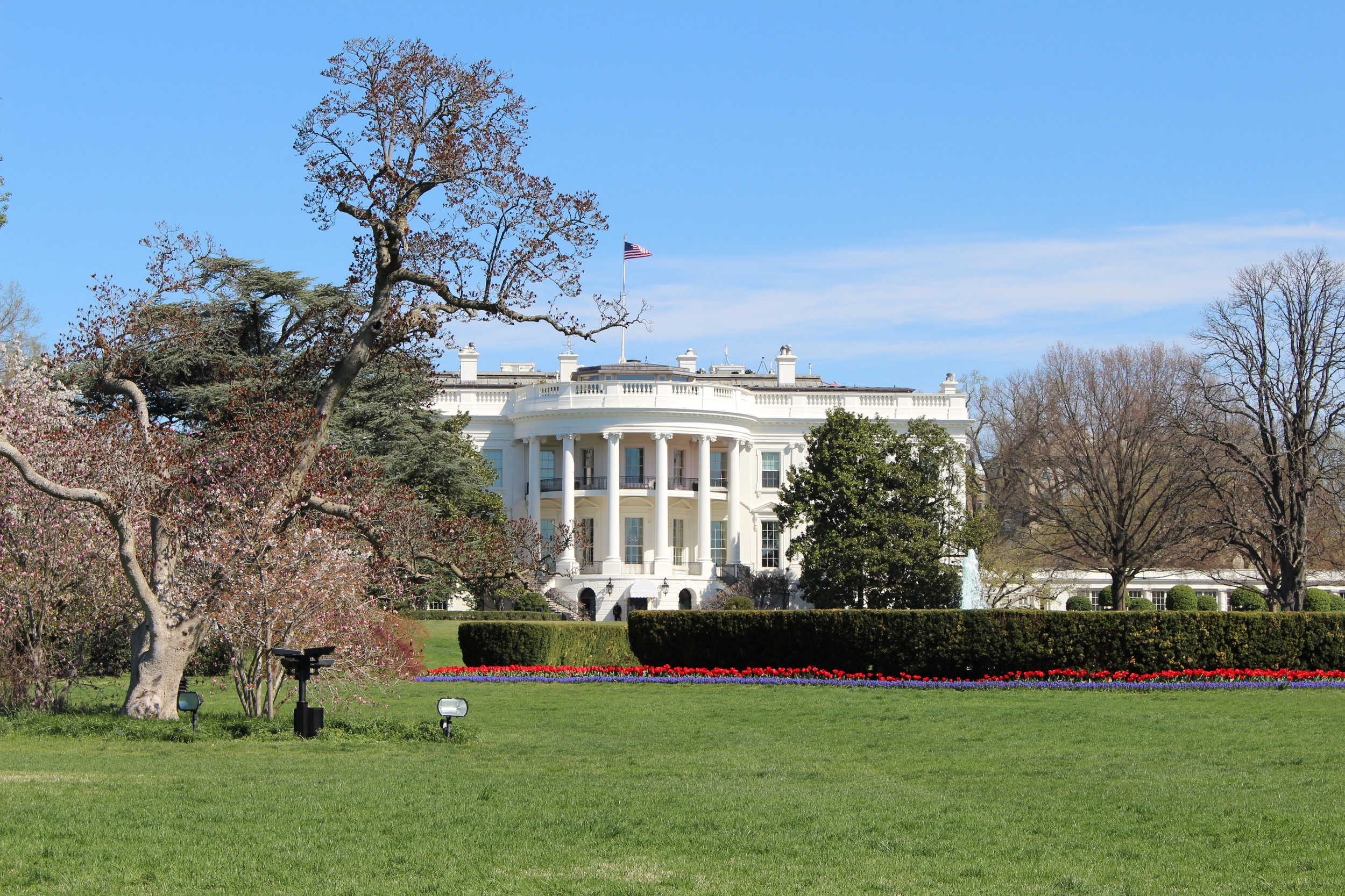 The White house during the cherry blossom festival