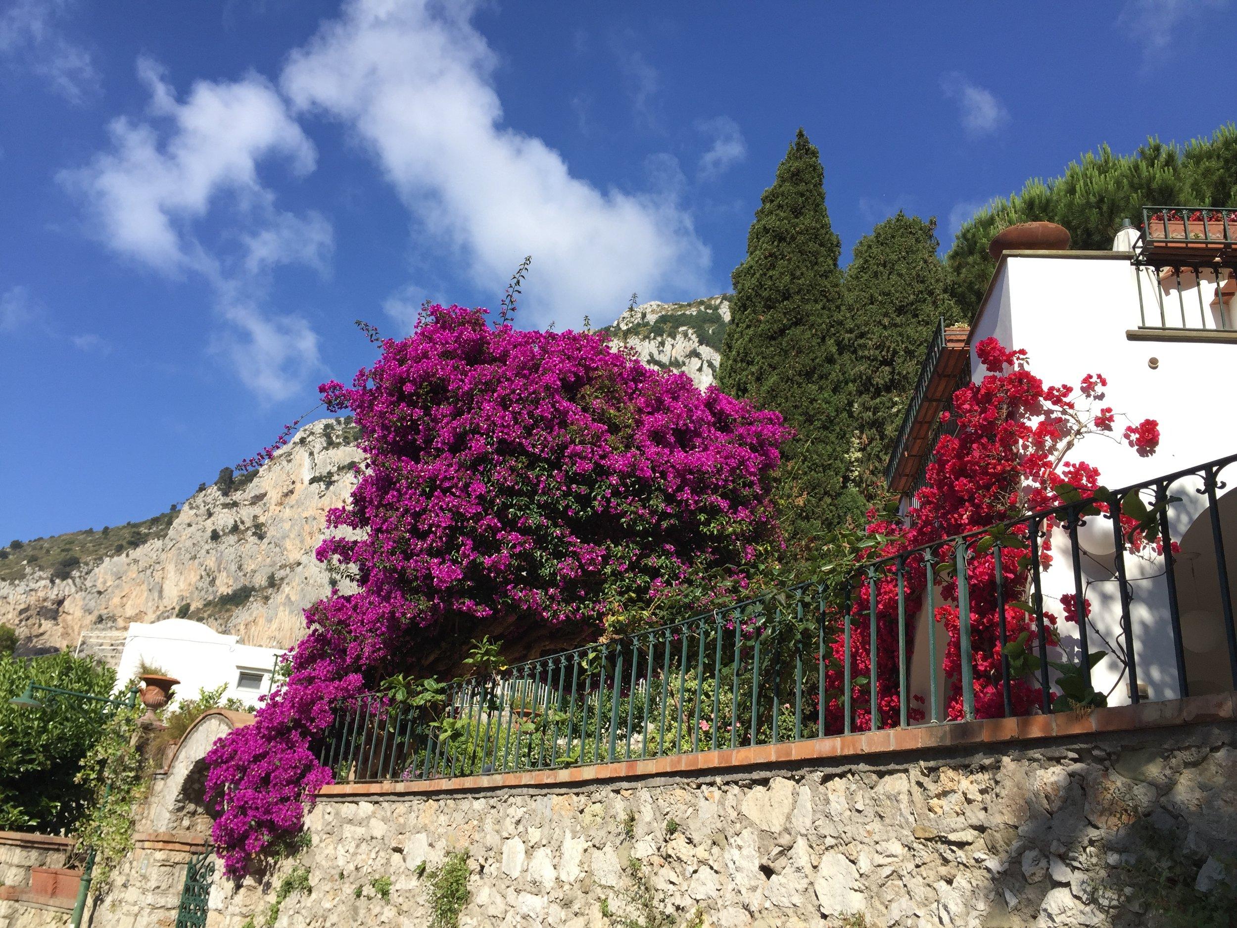 Flowers in Capri