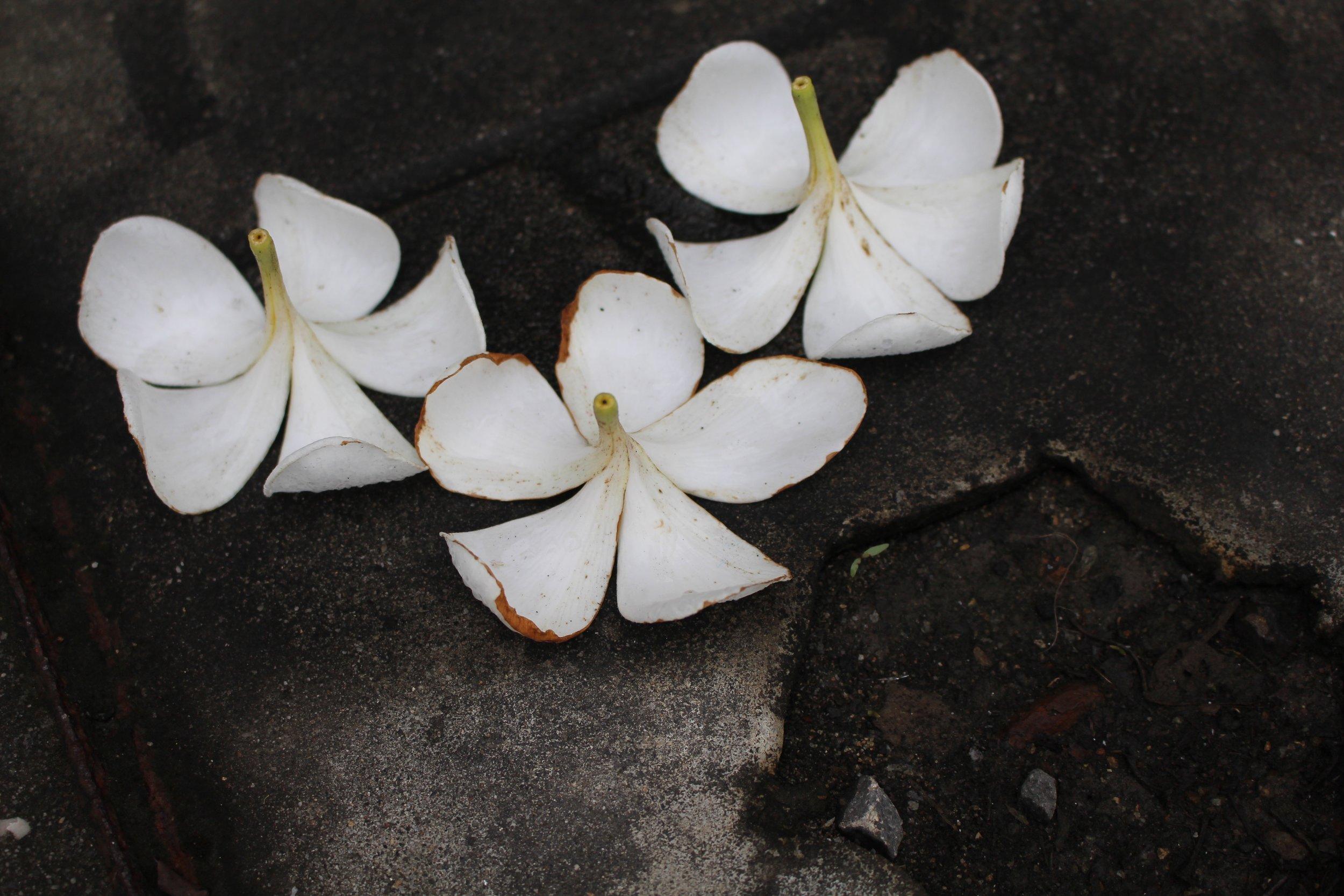 Flower pedals on the sidewalk in Udaipur