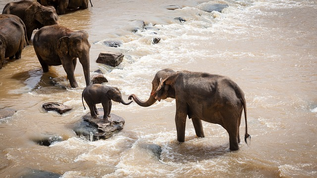 elephants-1900332_640.jpg