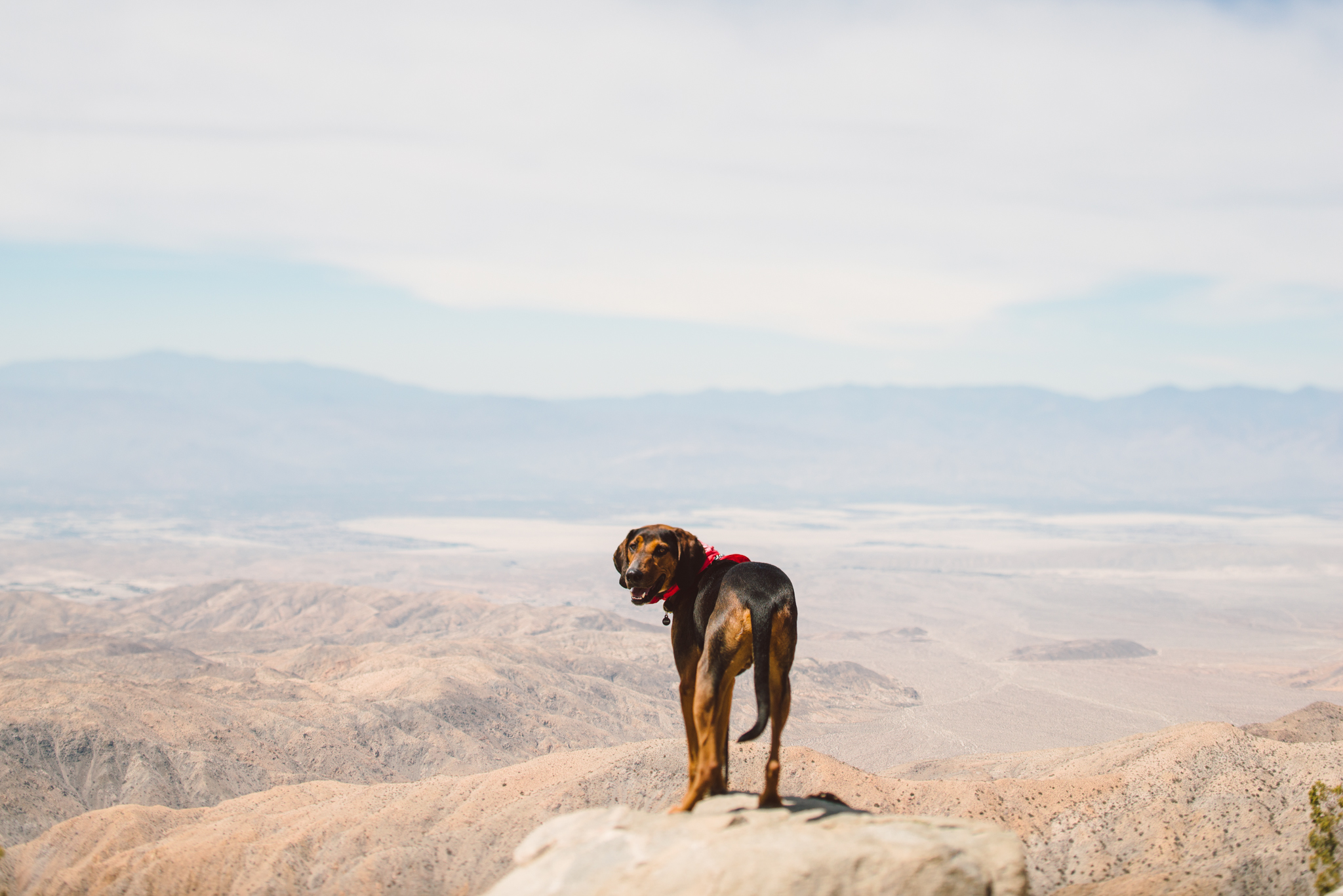 ©The Ryans Photography - Los Angeles Travel - Joshua Tree National Park-005.jpg