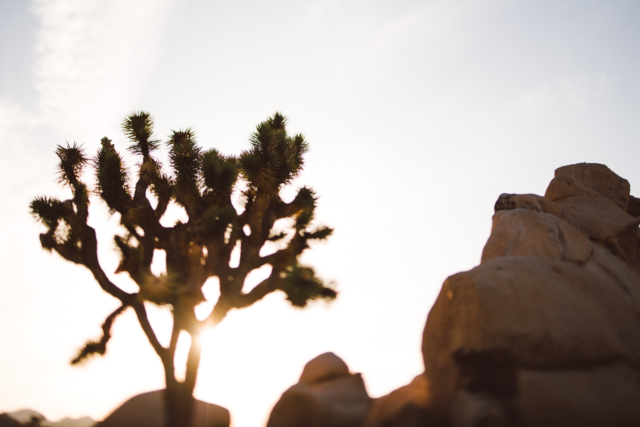 ©The Ryans Photography - Los Angeles Travel - Joshua Tree National Park-038.jpg