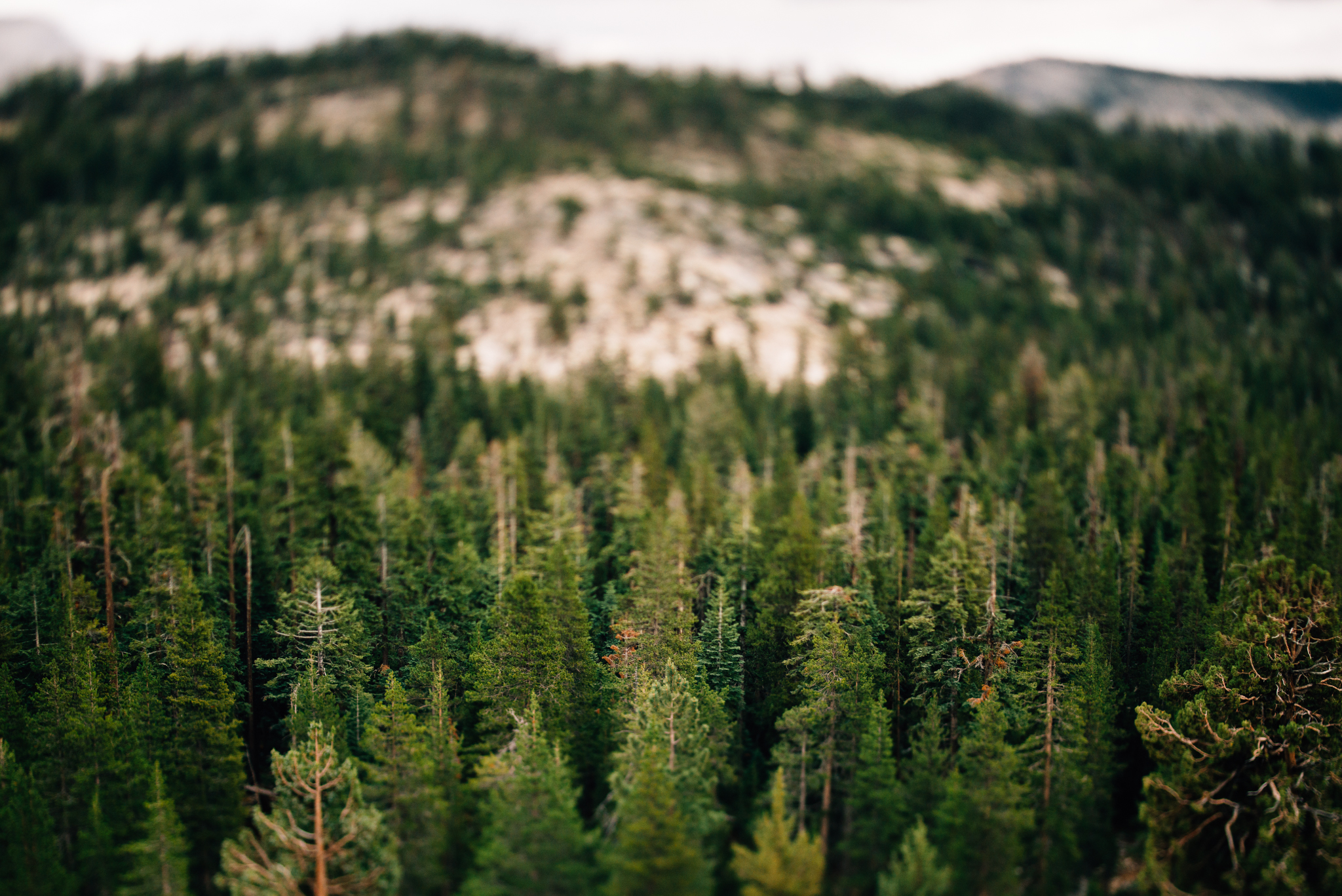 ©The Ryans Photography - Los Angeles Travel - Tuolomne Meadows Yosemite-028.jpg
