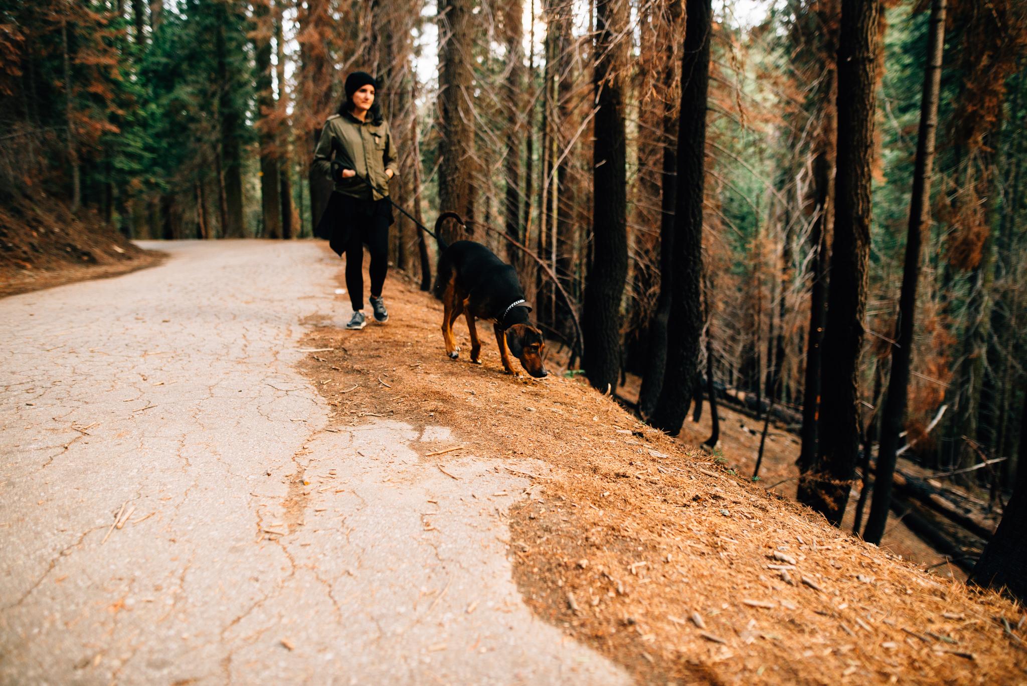 ©The Ryans Photography - Los Angeles Travel - Tuolomne Meadows Yosemite-040.jpg