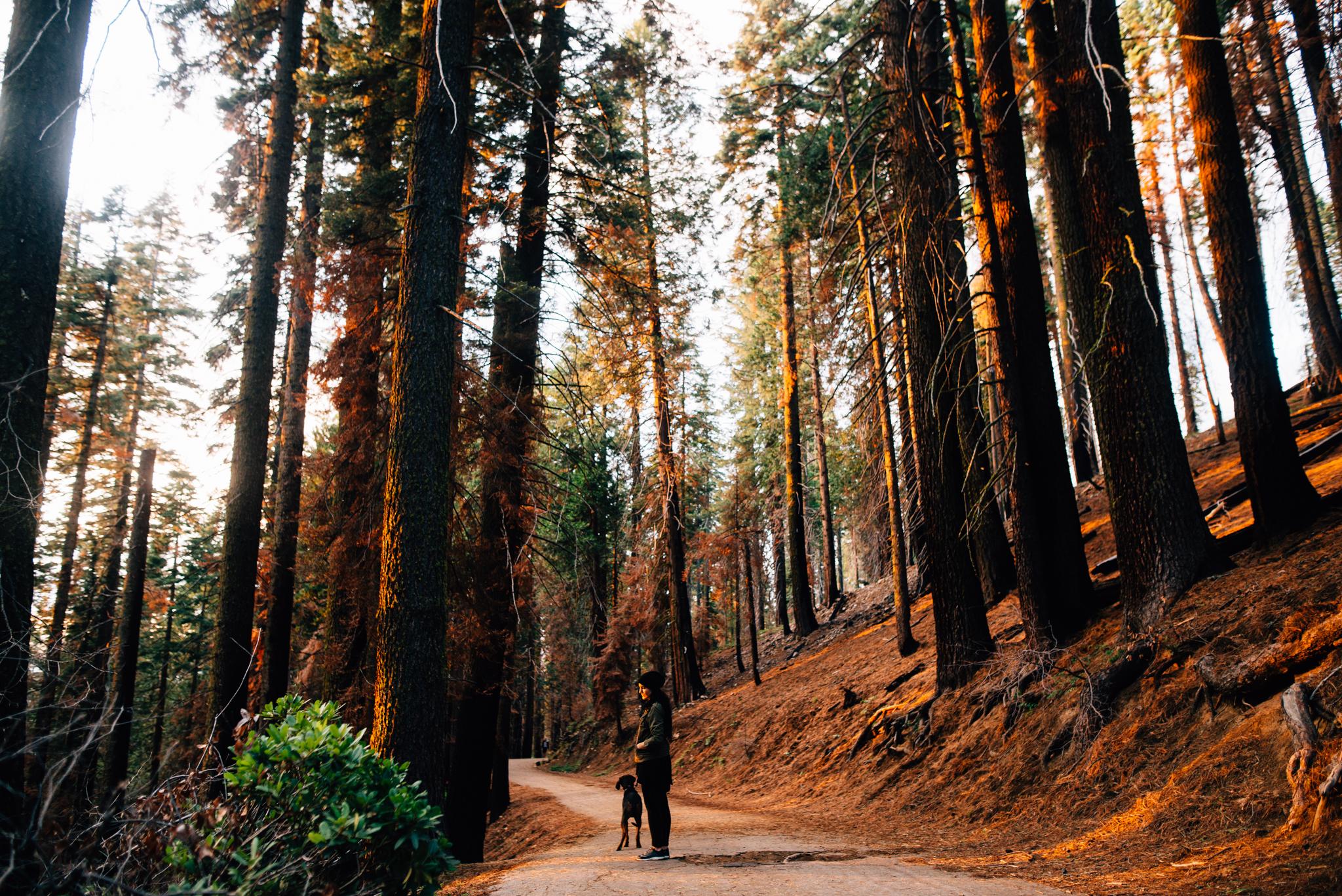 ©The Ryans Photography - Los Angeles Travel - Tuolomne Meadows Yosemite-041.jpg