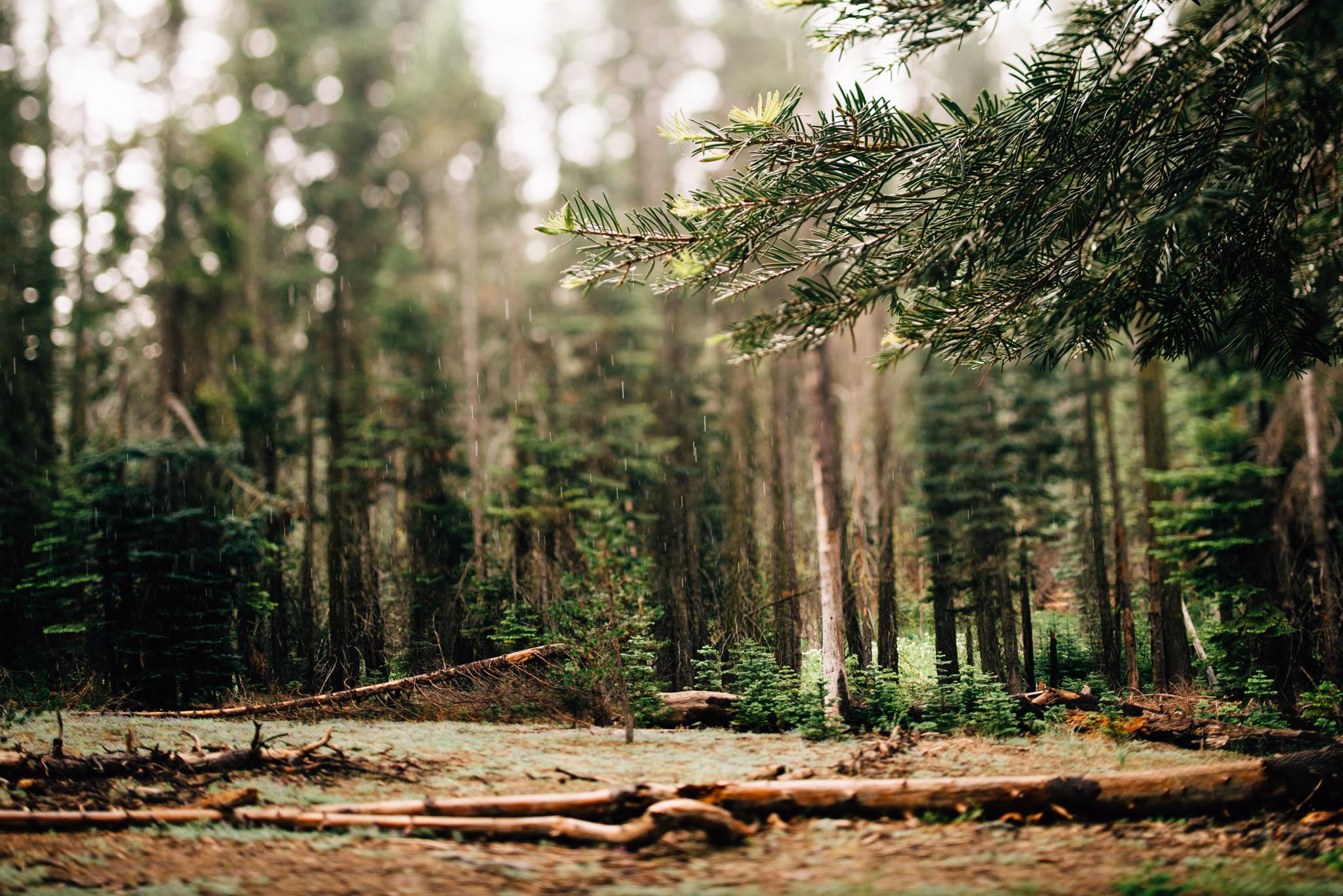 ©The Ryans Photography - Los Angeles Travel - Yosemite-003.jpg