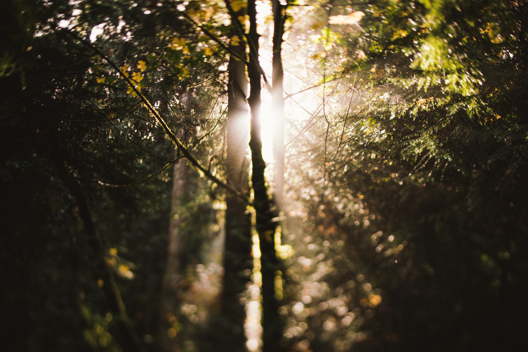 ©The Ryans Photography - Oregon Santiam Forest Lifestyle-001.jpg