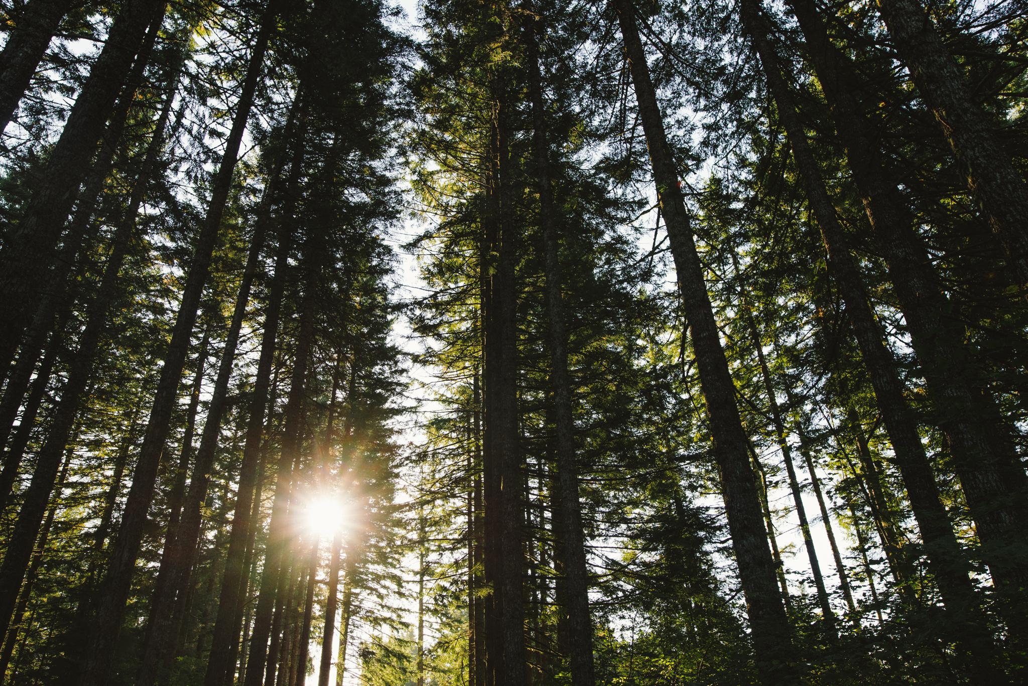 ©The Ryans Photography - Oregon Santiam Forest Lifestyle-009.jpg